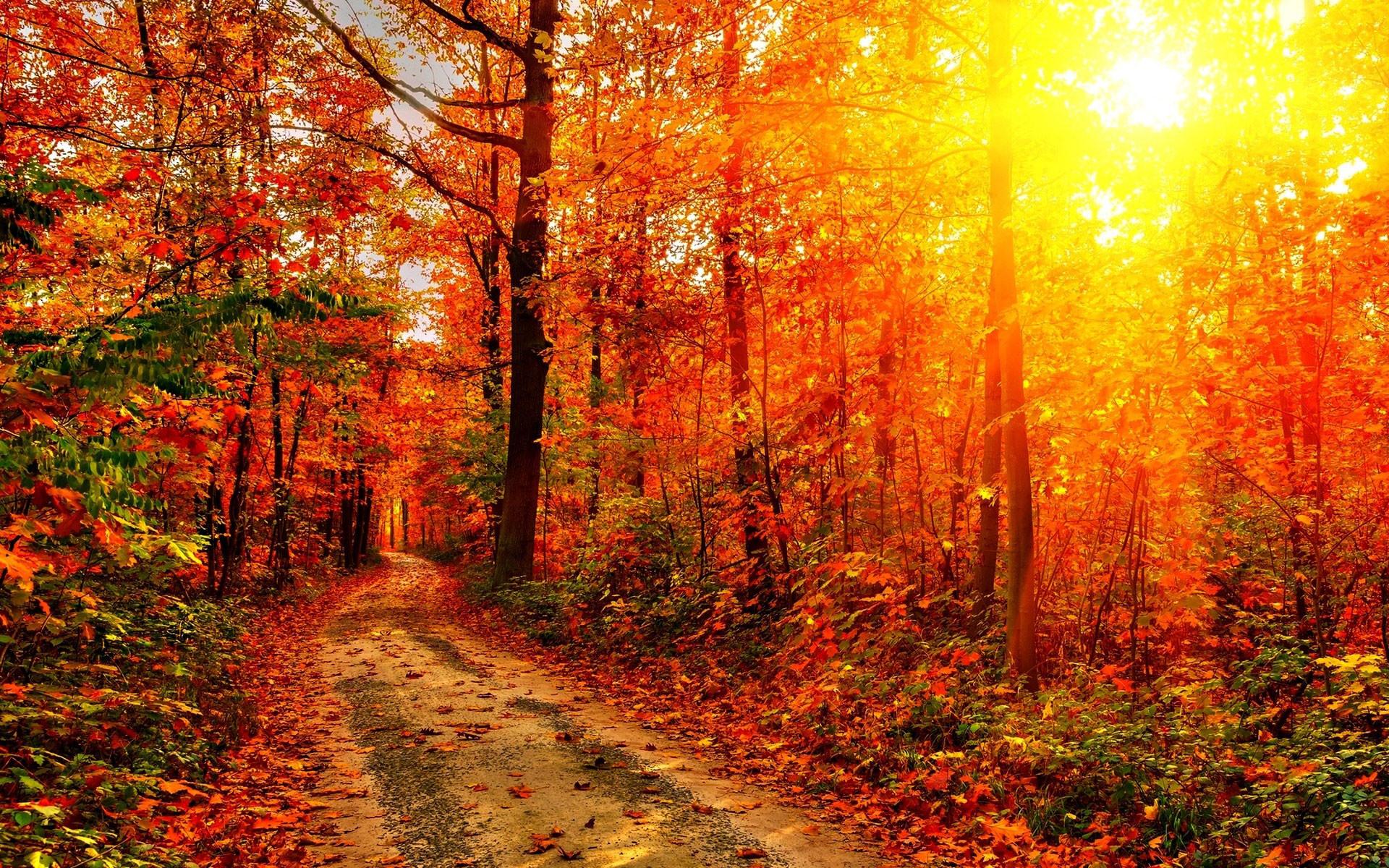 <b>Autumn HD</b> Widescreen <b>Wallpaper</
