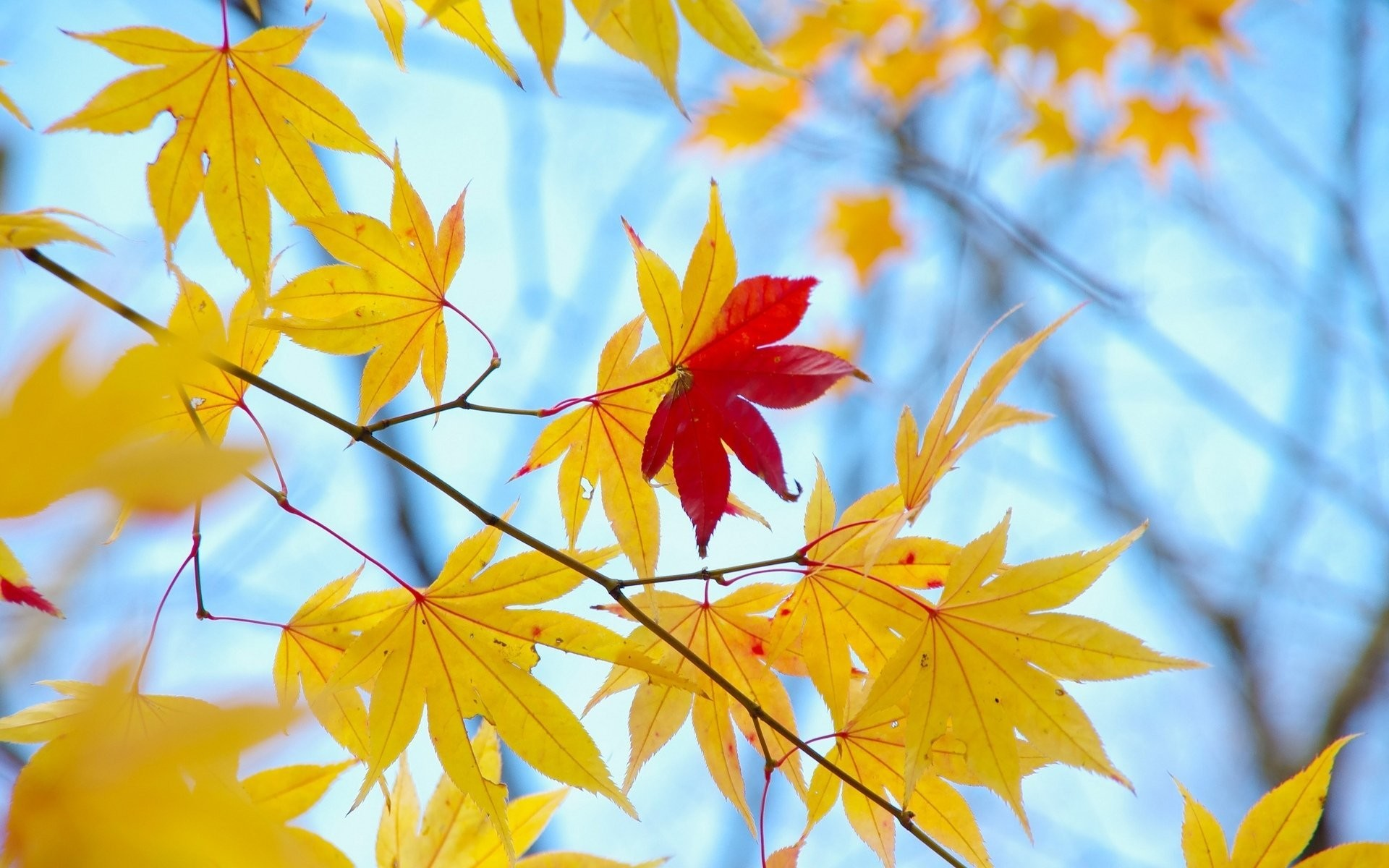 close up leaves leaves autumn yellow red tree tree leaves macro background wallpaper  widescreen full screen