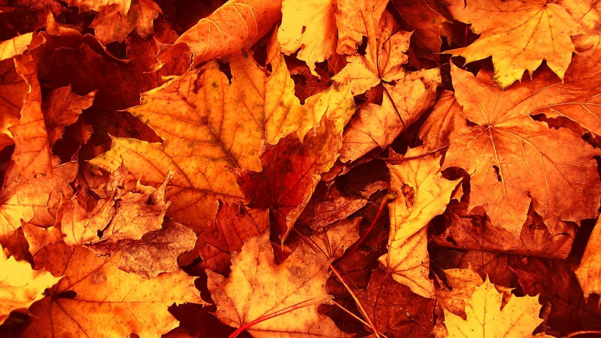 Autumn Leaves Wallpaper Widescreen