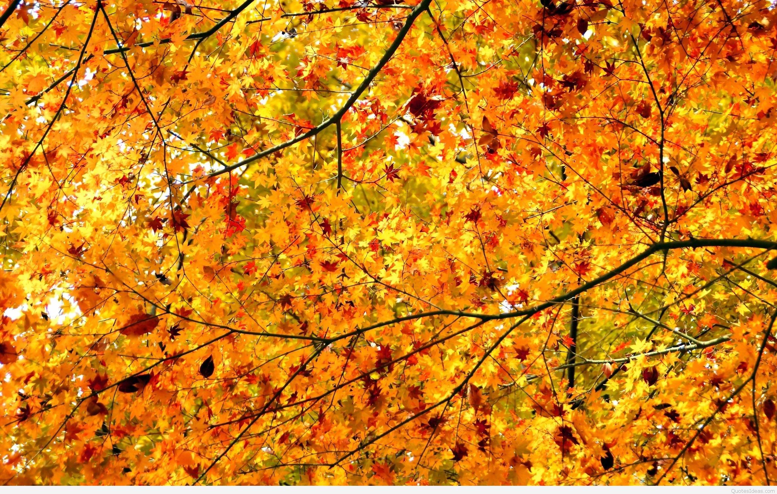… autumn-leaves-hd-wallpaper …