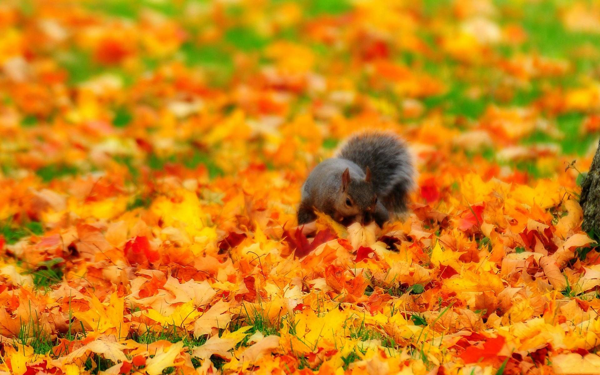 Autumn Wallpaper Hd Widescreen(35).jpg