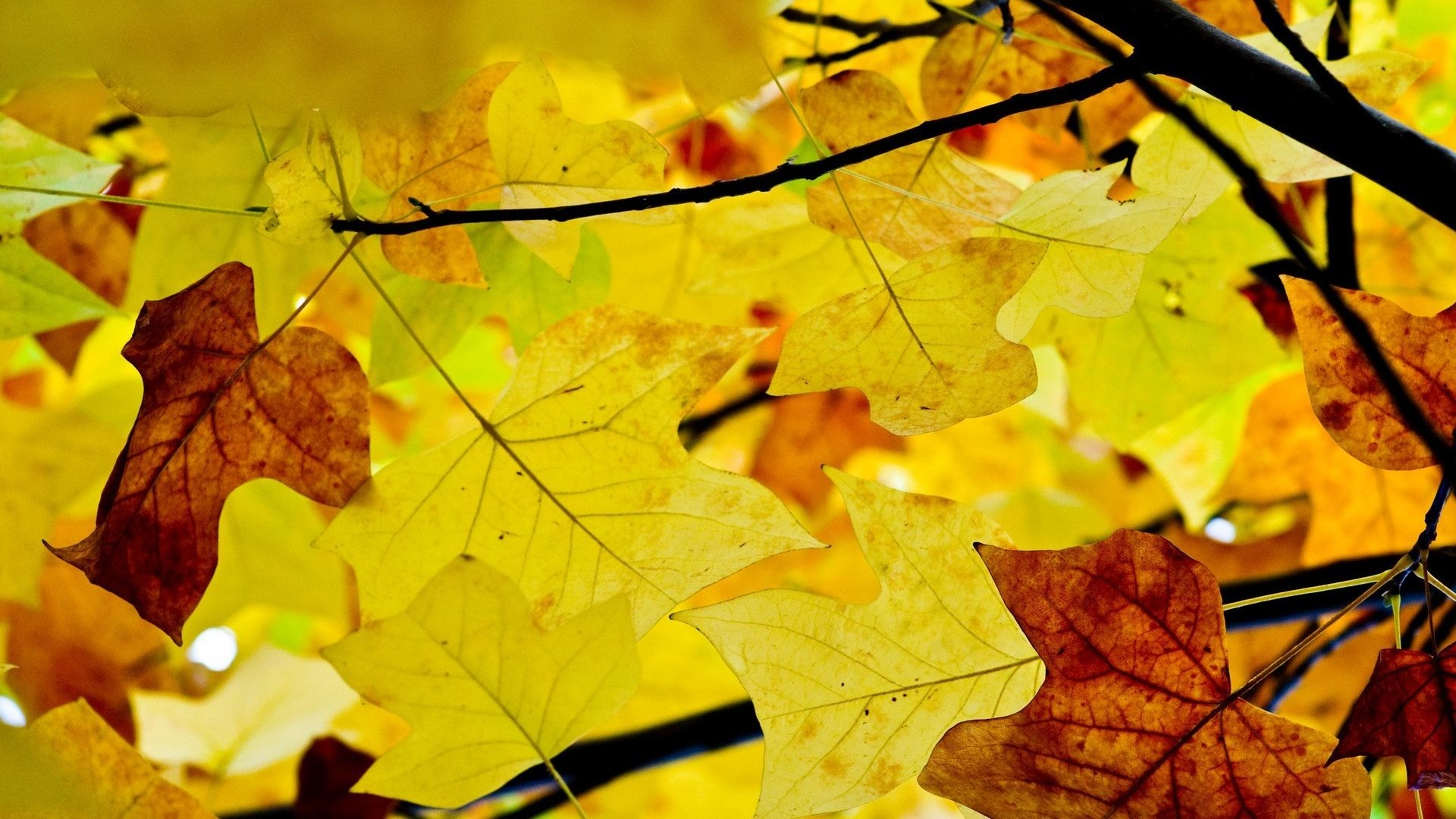 #AA6600 Color – Nature Season Autumn Hd Free Download for HD 16:9 High