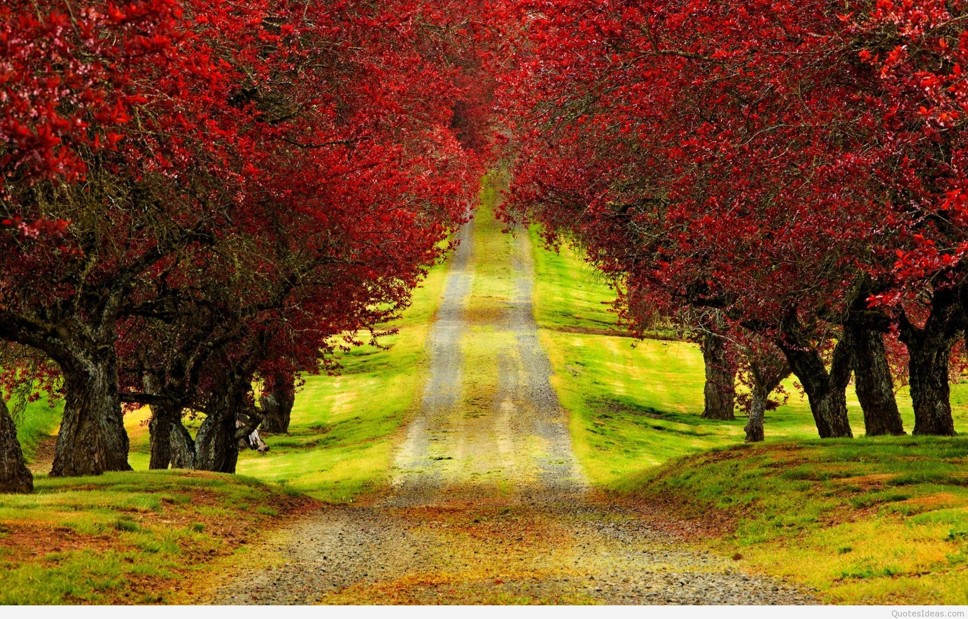 … landscape-charming-red-trees-autumn-long-road-hd- …