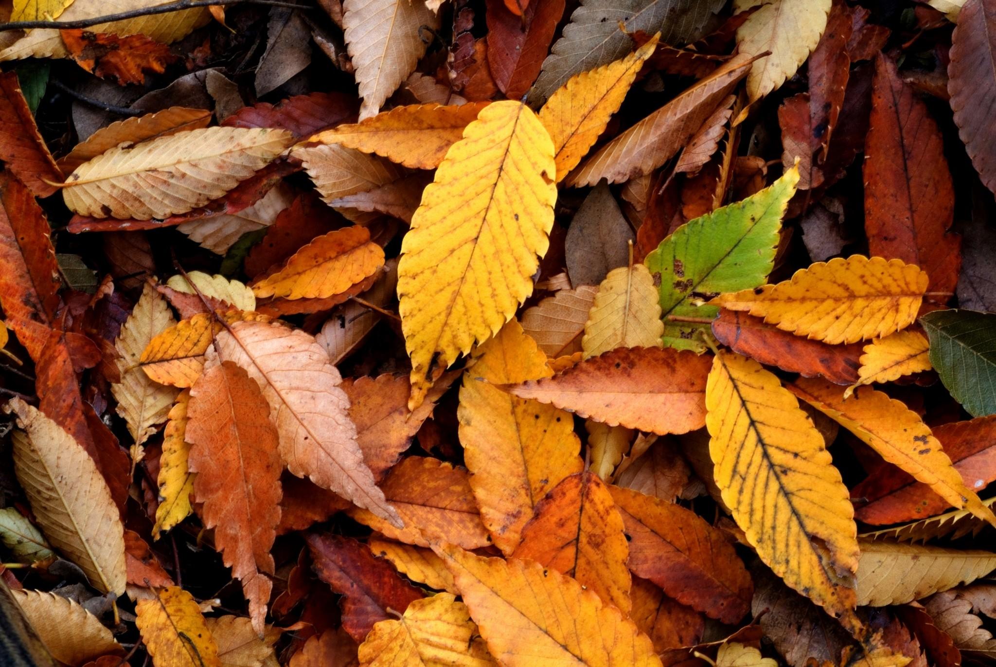 autumn hd widescreen wallpapers