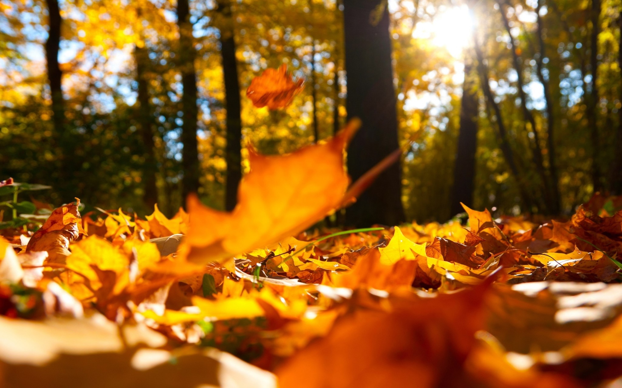 autumn hd widescreen wallpapers for laptop
