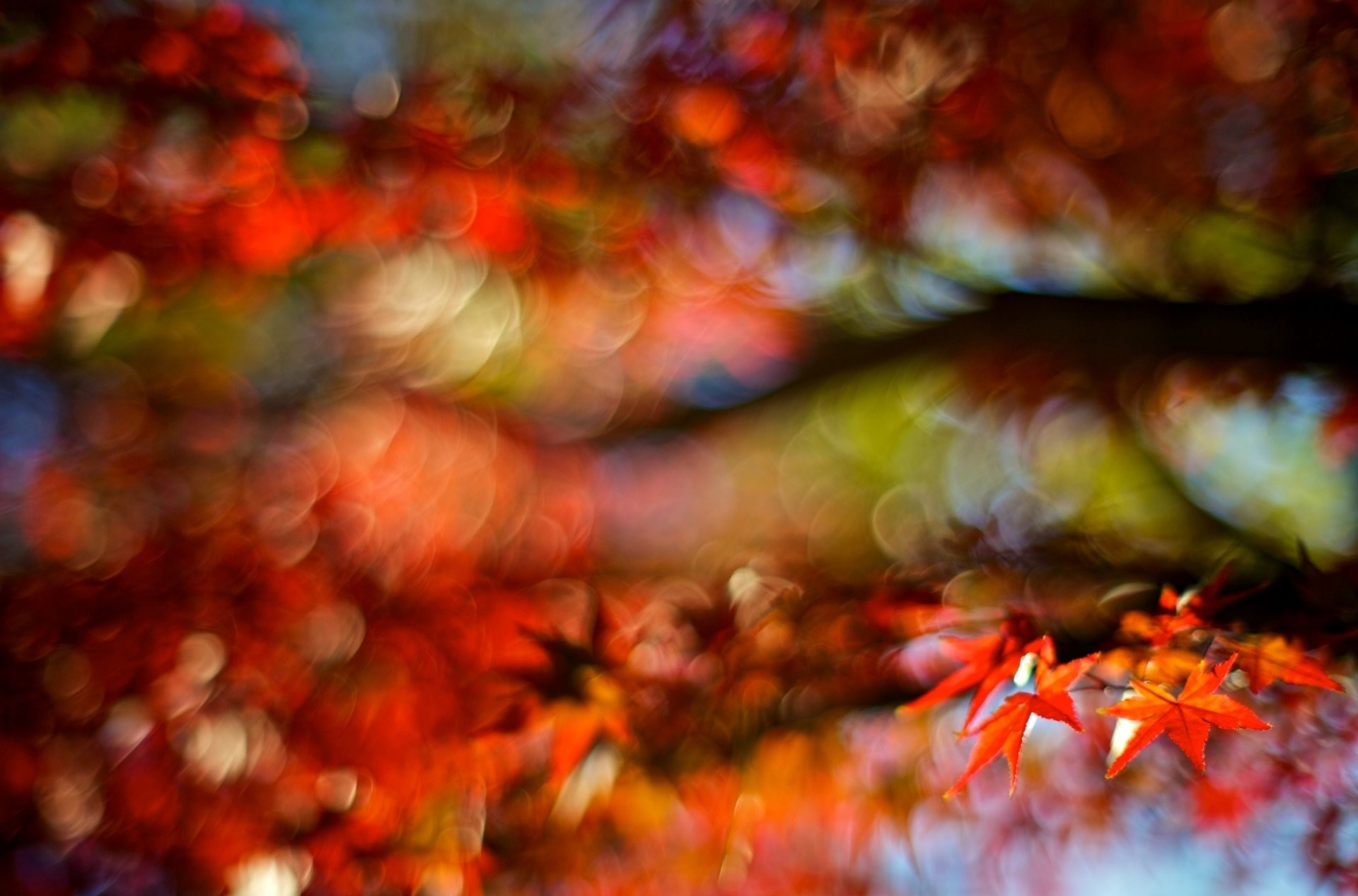 close up leaf leaf autumn red blur blur tree bokeh background wallpaper  widescreen full screen widescreen