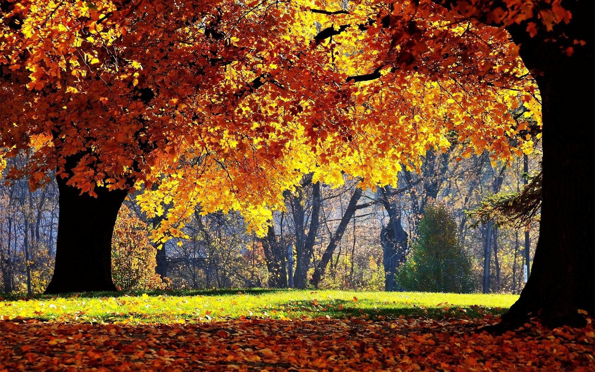 Autumn Forest Wallpaper Widescreen – Tera Wallpaper
