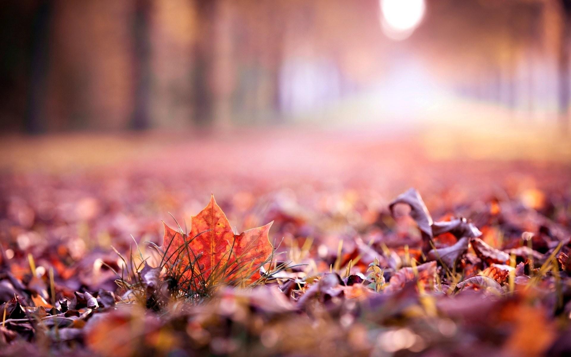 close up autumn leaves leaf leaf autumn autumn leave leaves macro blur  beautiful wallpaper widescreen full