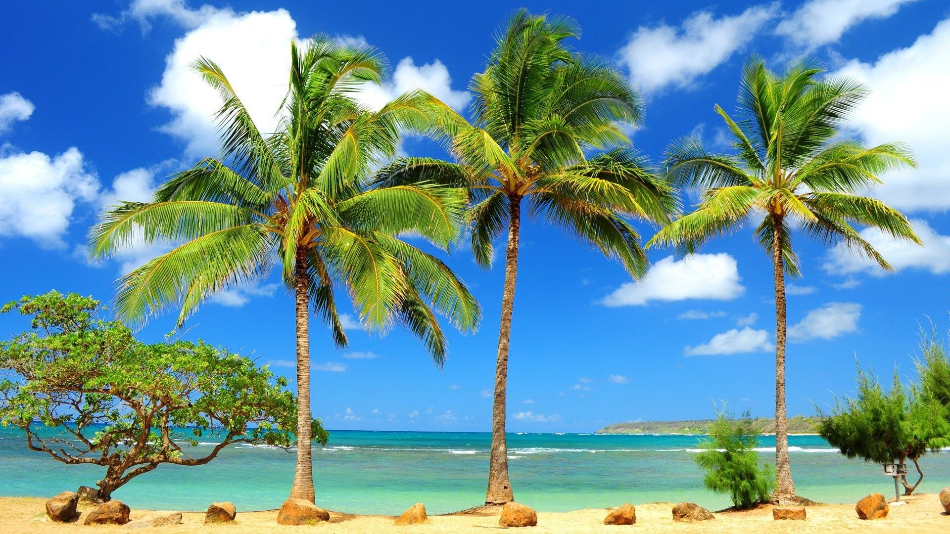 … Tropical HD Wallpapers Group (8)