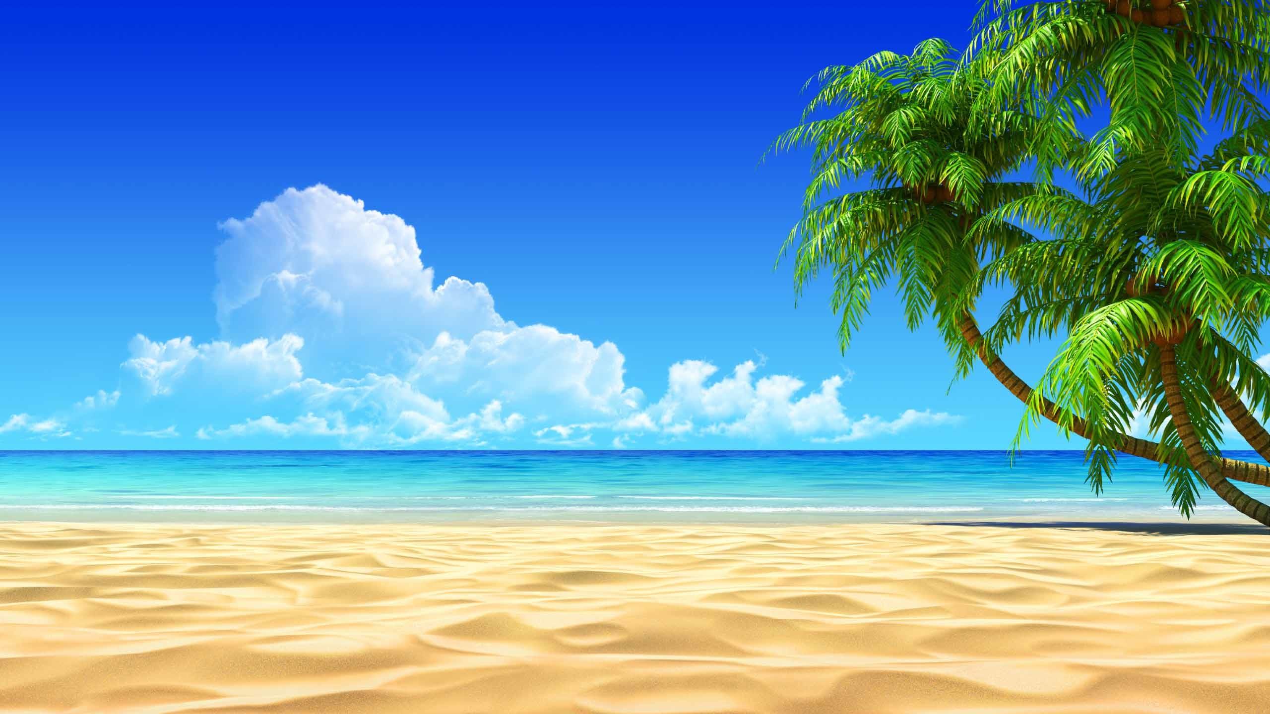 Beach Tropical Hd Wallpaper