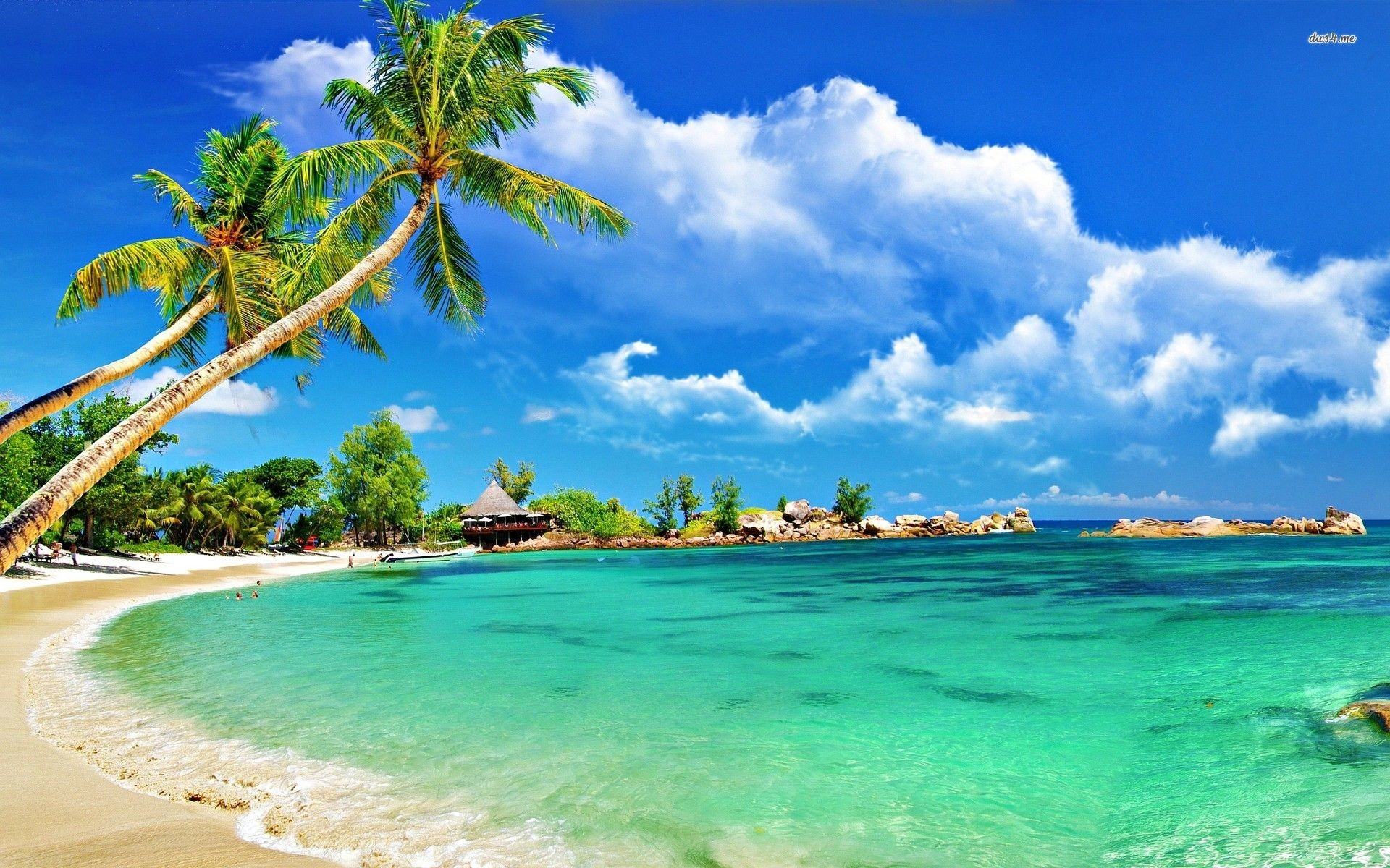 Tropical Beach Background …