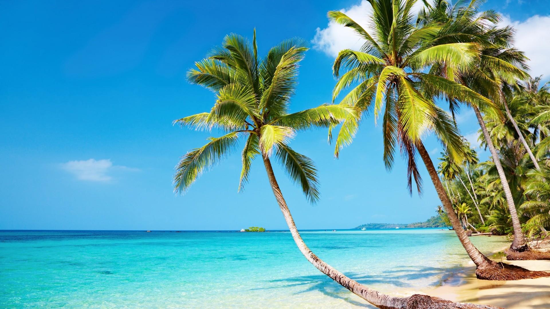 Tropical Beach HD Wallpaper | WallpaperSafari