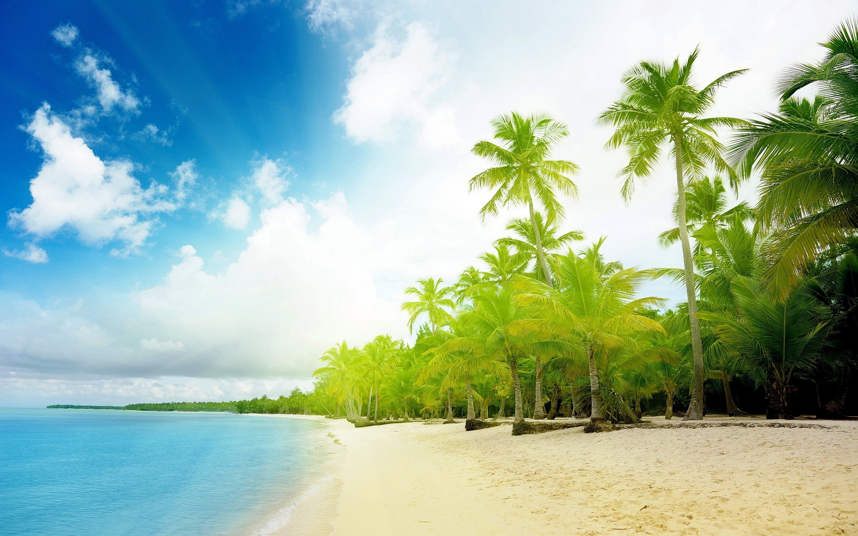 Beach Tropical Palm Trees HD Wallpaper in High Resolution at Nature .