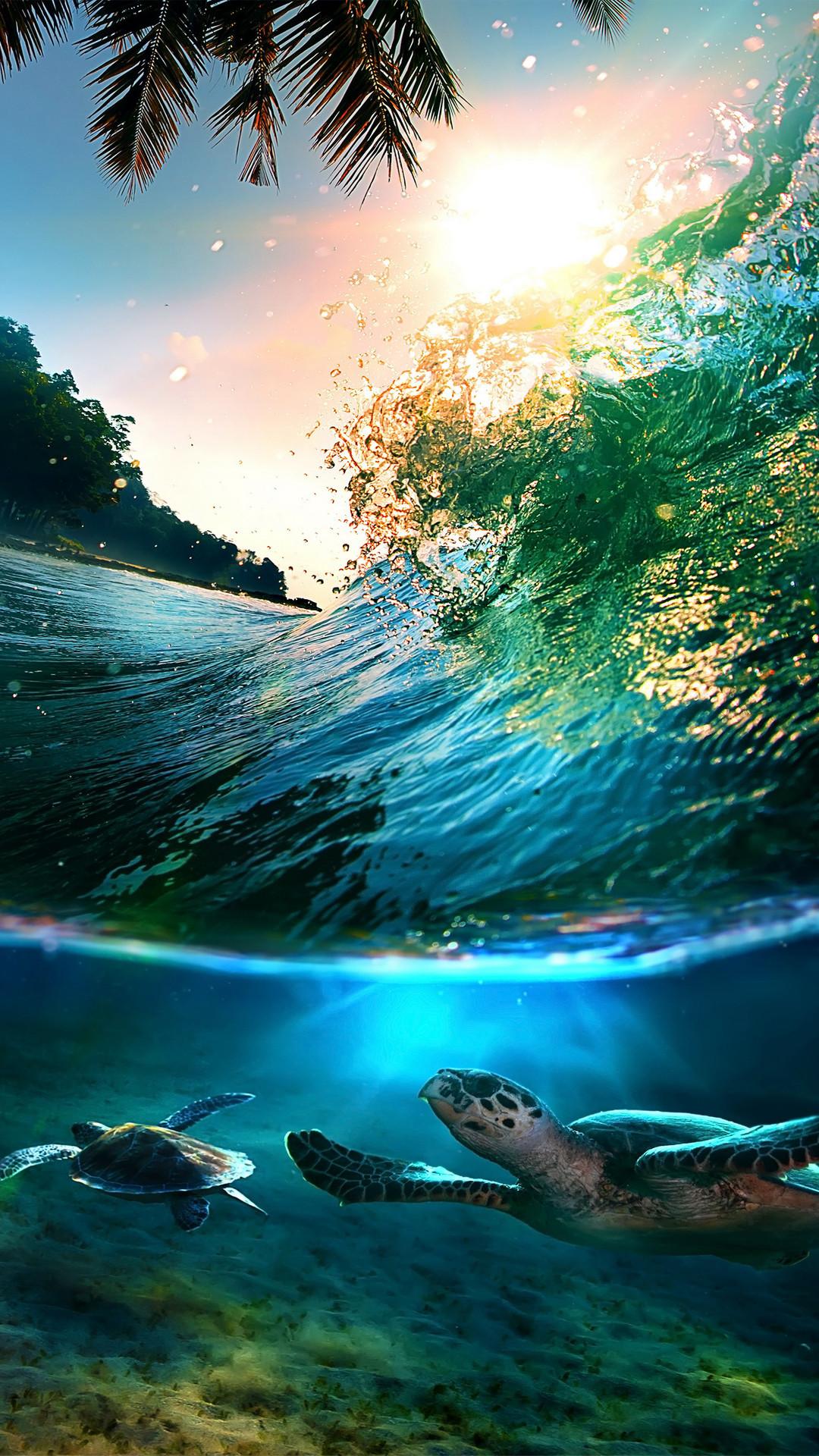 Tropical-Sea-Island-Turtles-iPhone-6-Plus-HD-