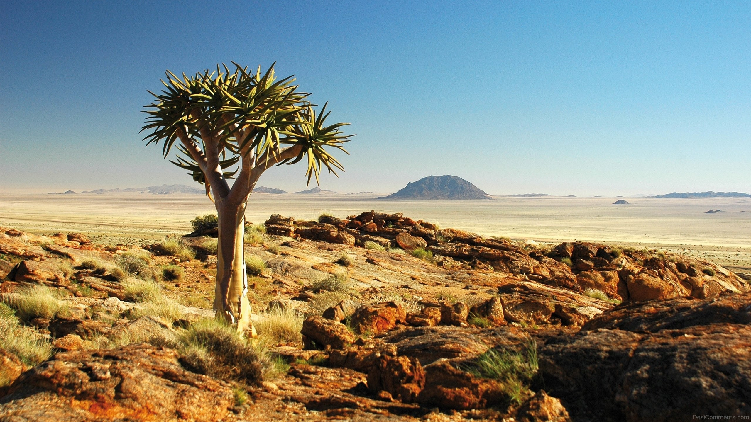 Arizona Desert Wallpapers Group 2560×1440