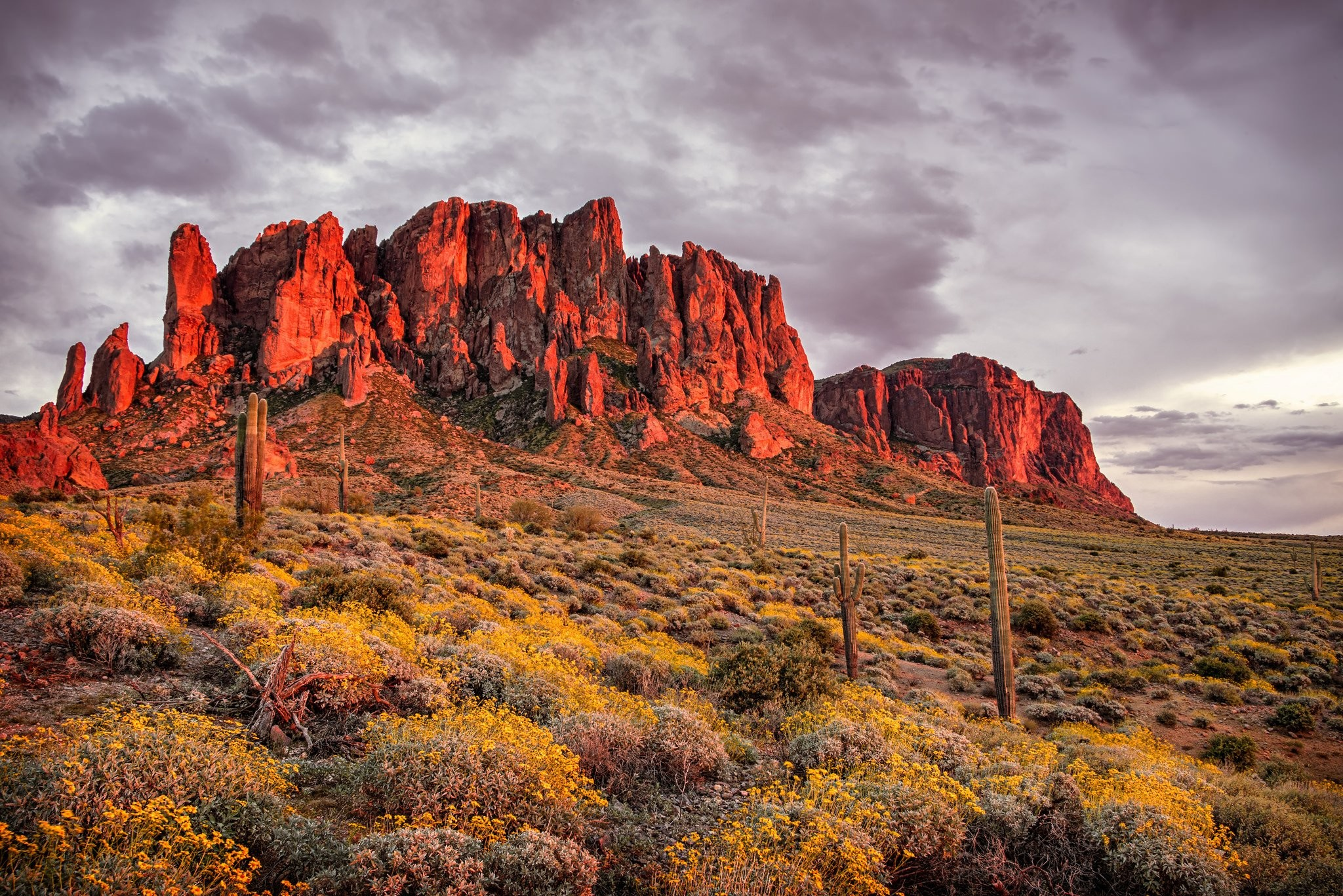 Mountains desert flowers cactus Apache Junction State of Arizona  Superstition Mountains wallpaper     647743   WallpaperUP
