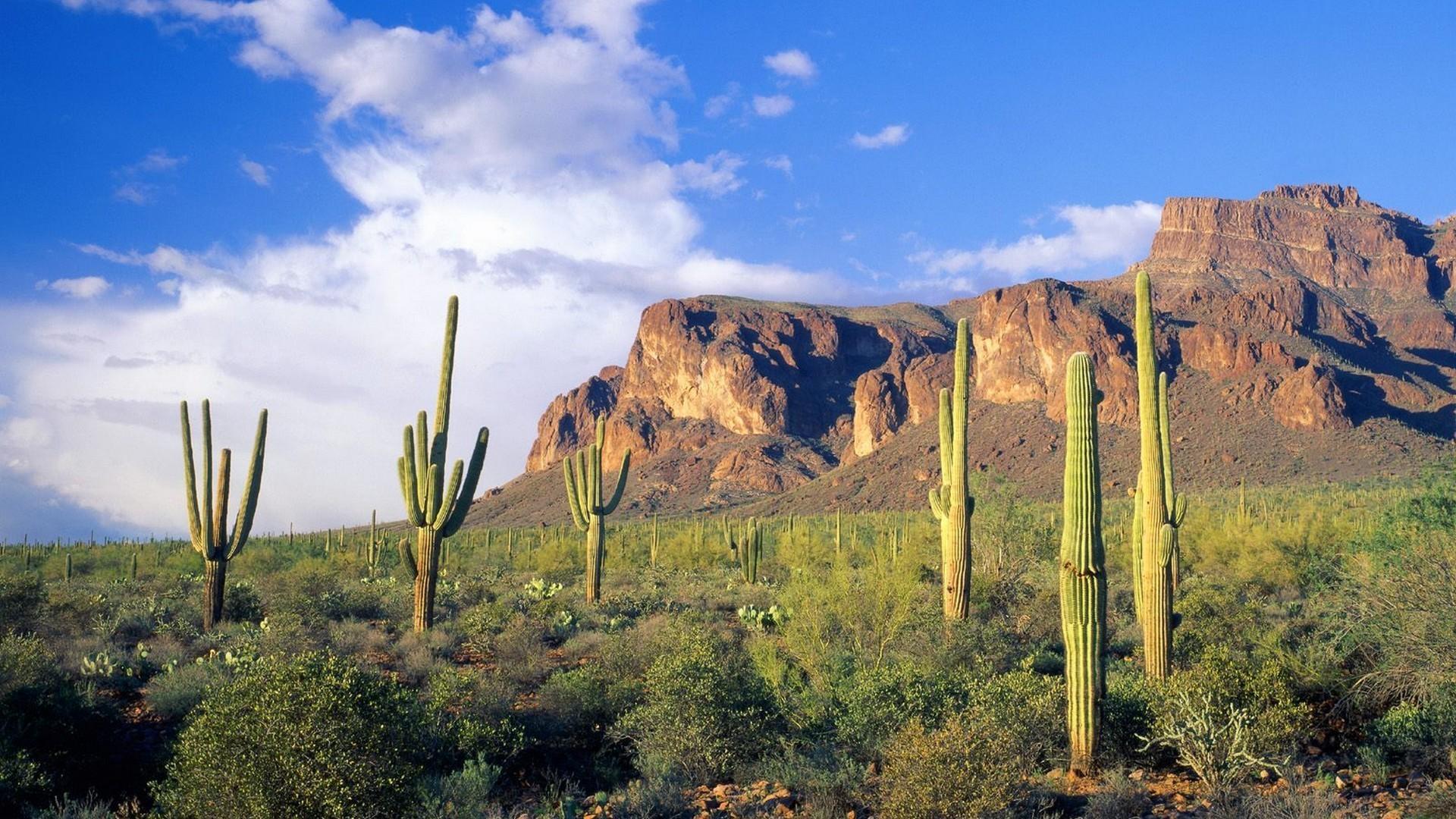 landscapes forests Arizona national cactus Tonto wallpaper background .
