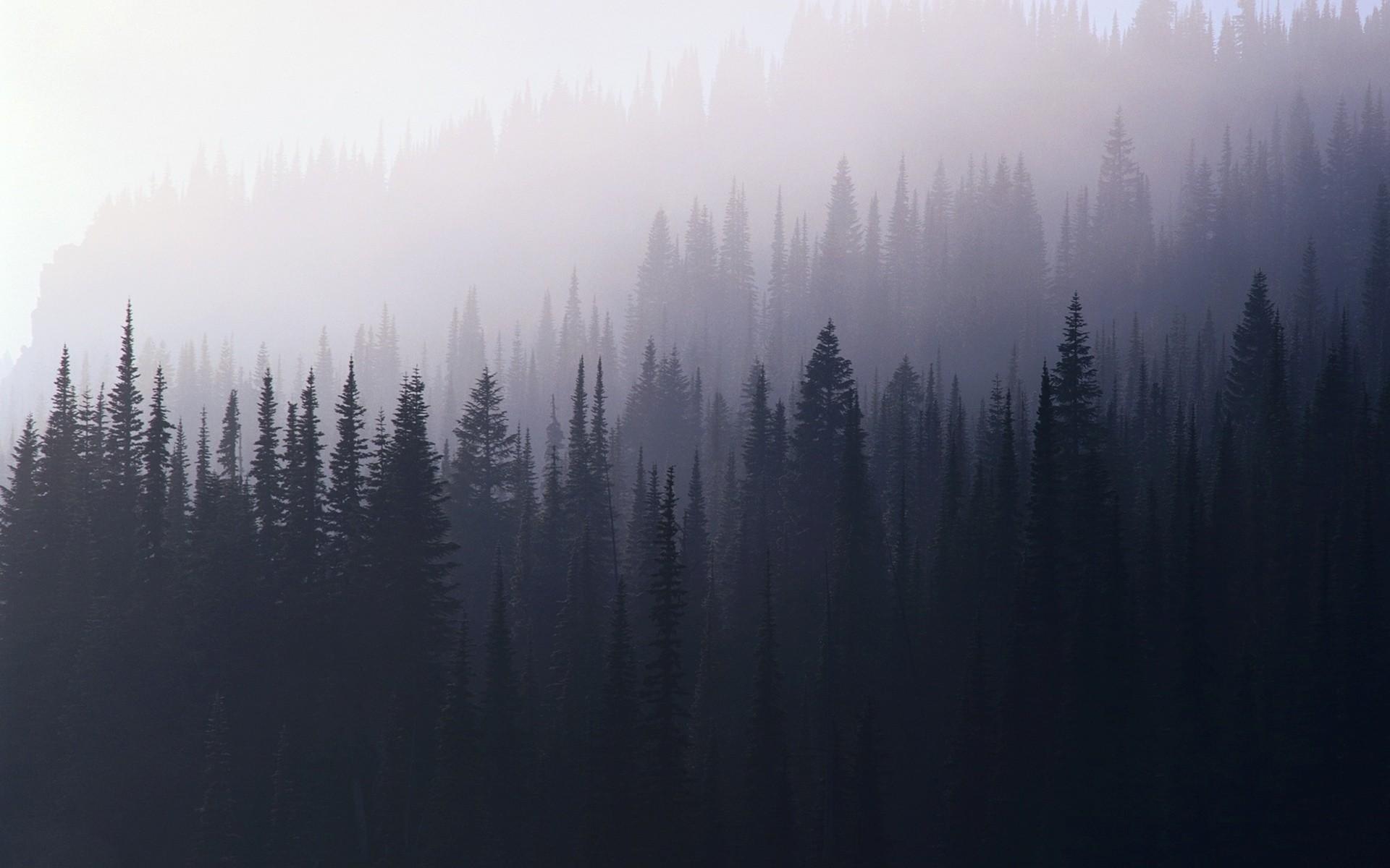Foggy forest HD Wallpaper 1920×1080 Foggy forest HD Wallpaper 1920×1200