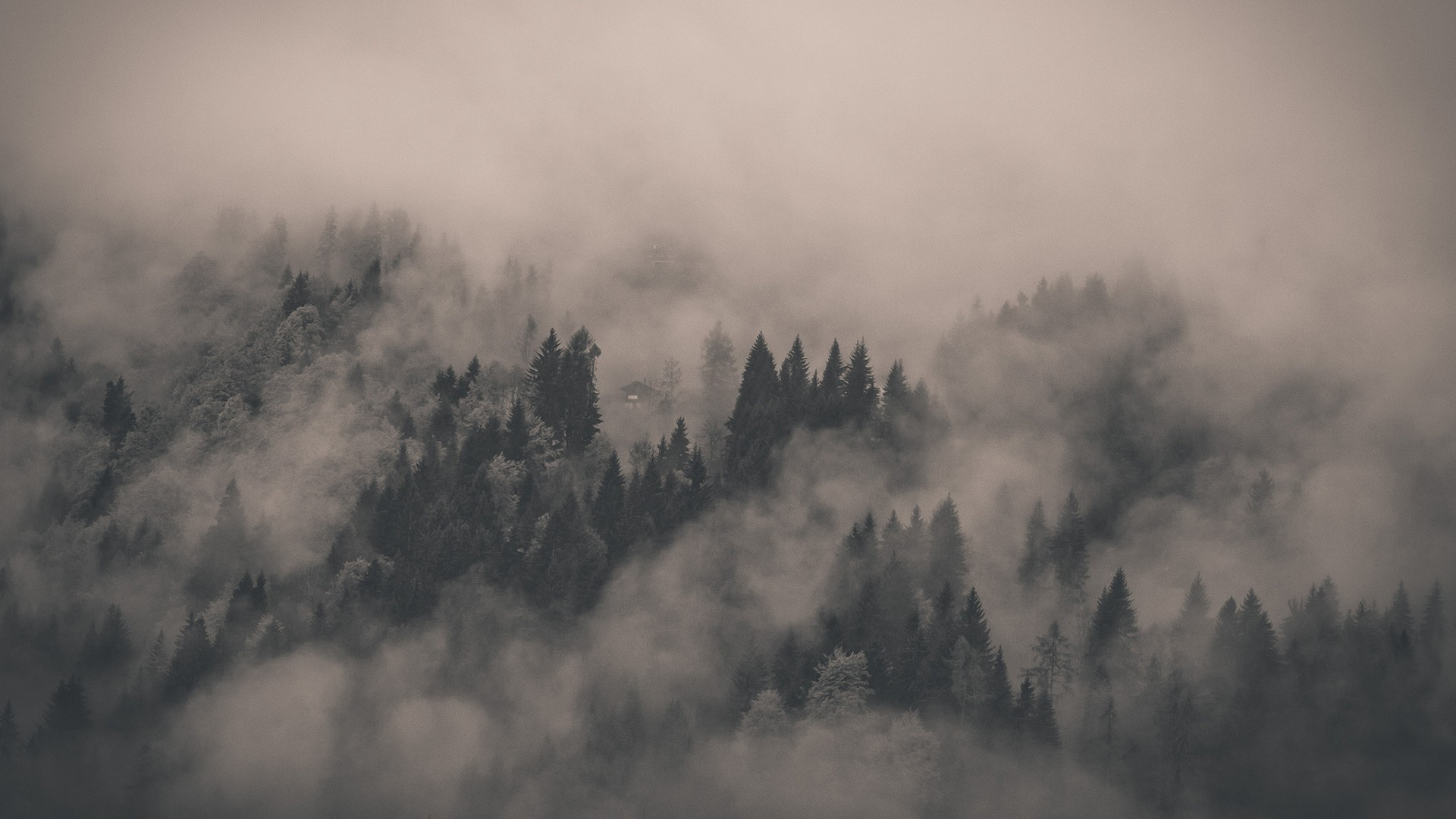 Foggy Forest Wallpaper 13858