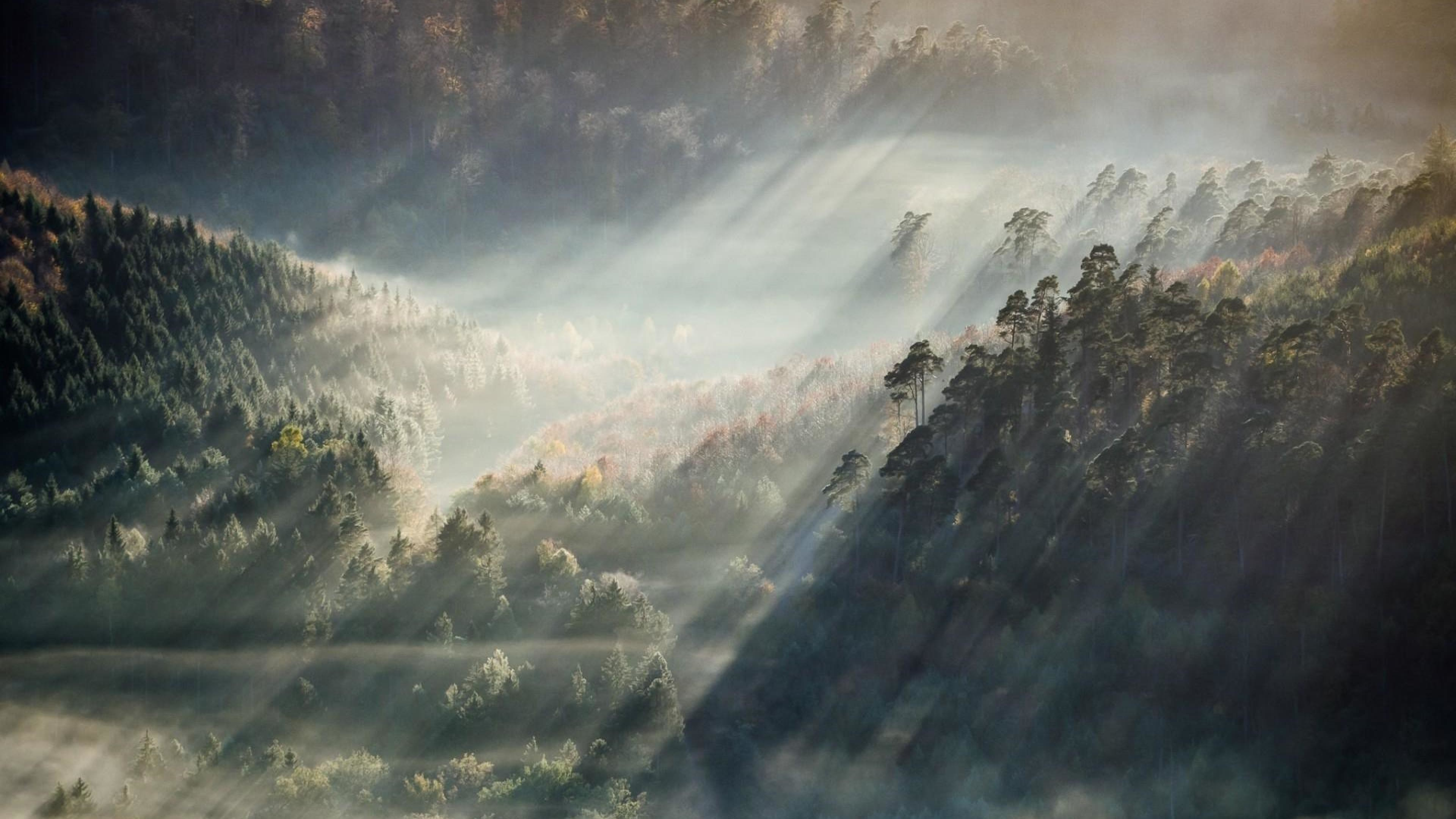 Pictures HD Foggy Forest.