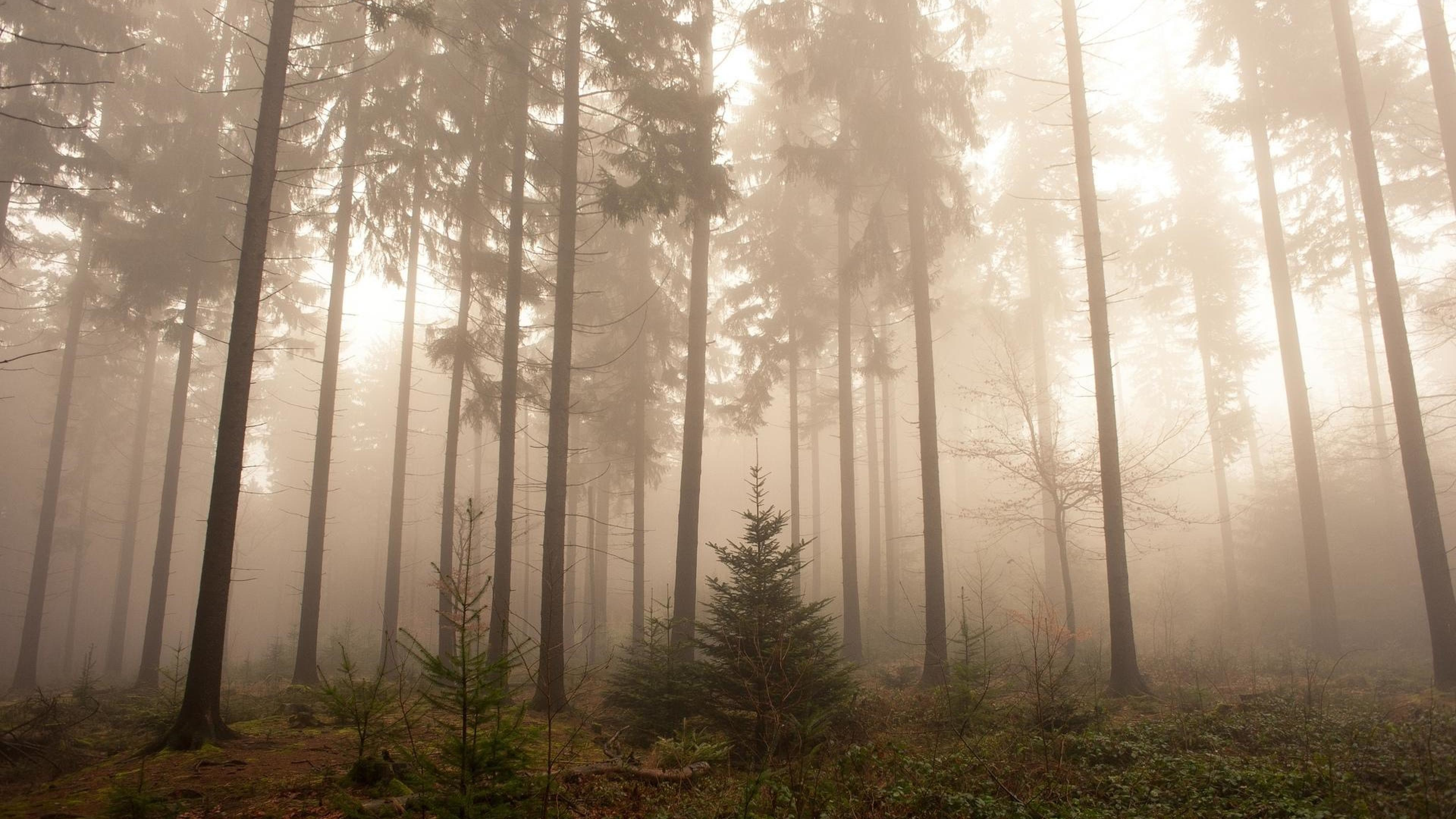wallpaper.wiki-Nature-Foggy-Forest-Wallpapers-PIC-WPB004351