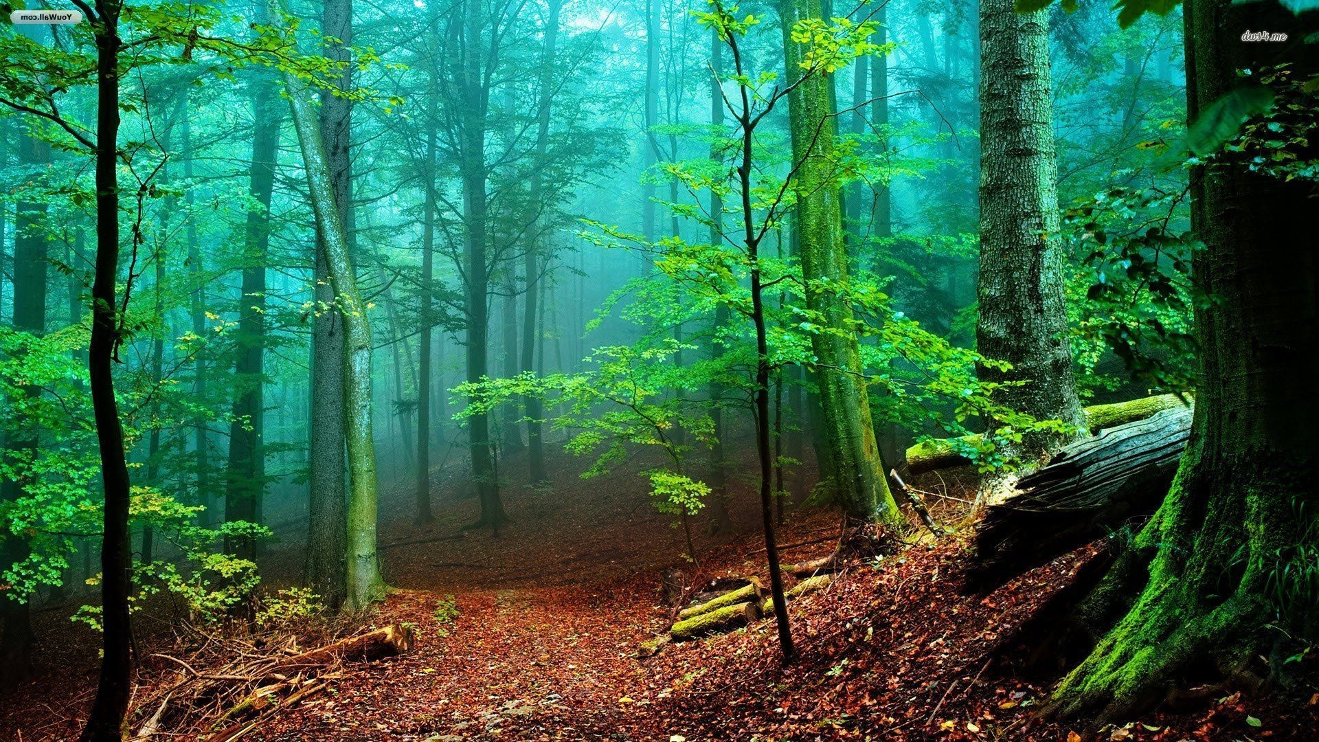 Fall Fairy Garden backgrounds | Foggy forest wallpaper 1280×800 Foggy  forest wallpaper 1366×768 Foggy .