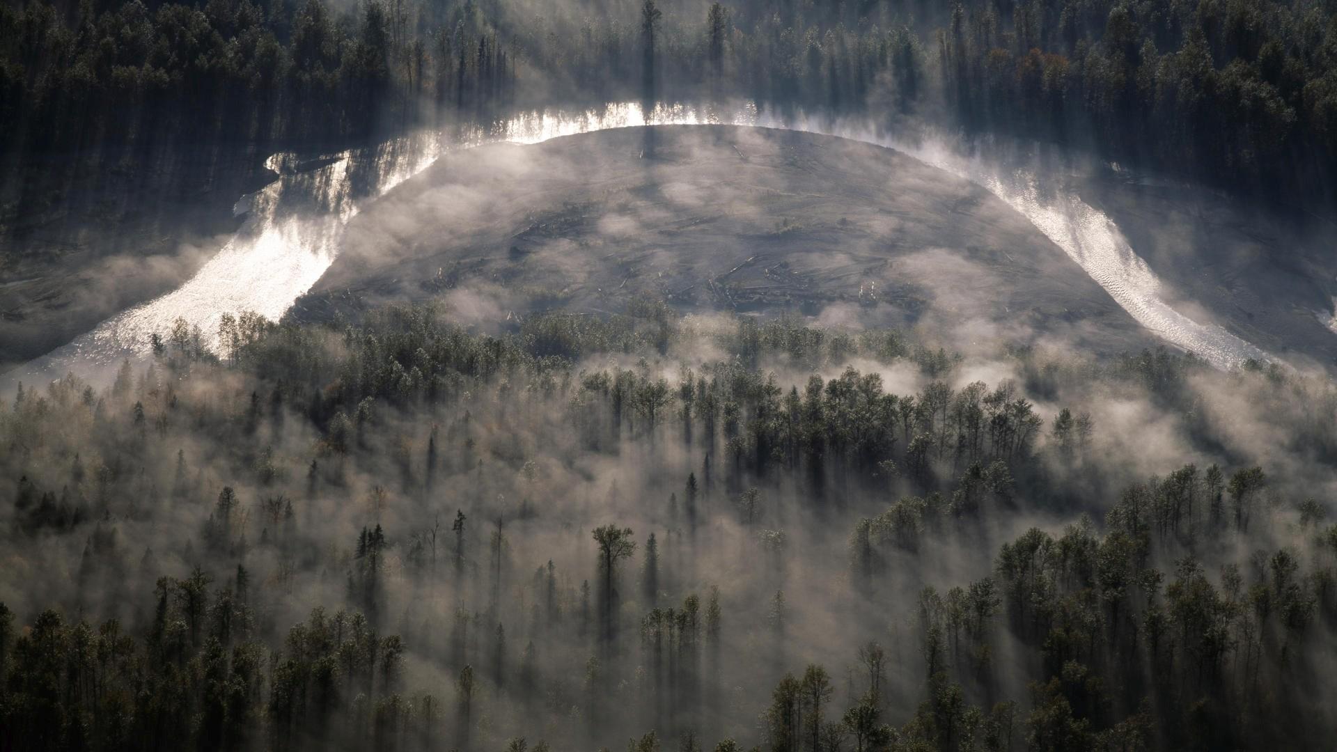 https://wallpaperrs.com/uploads/nature/foggy-pine-forest-wide-wallpaper-34293.jpg  | Tall Trees | Pinterest
