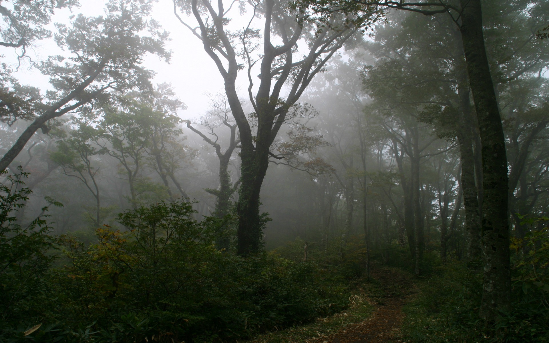 Foggy Forest Wallpaper Landscape Nature Wallpapers