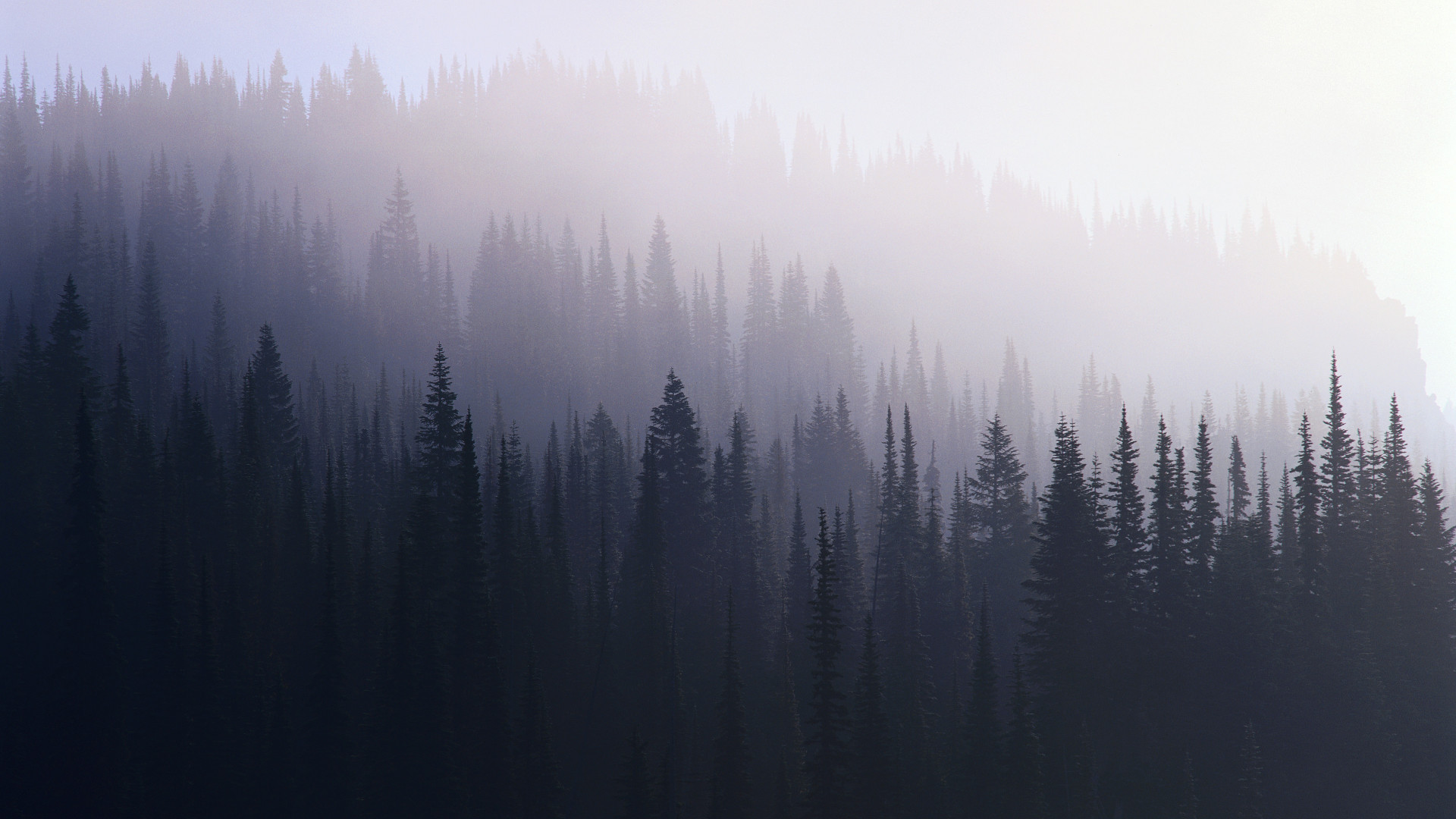 69 Foggy Forest