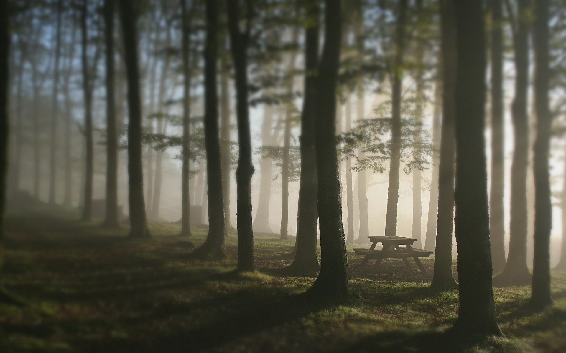 Foggy Forest Blur Wallpaper 13877