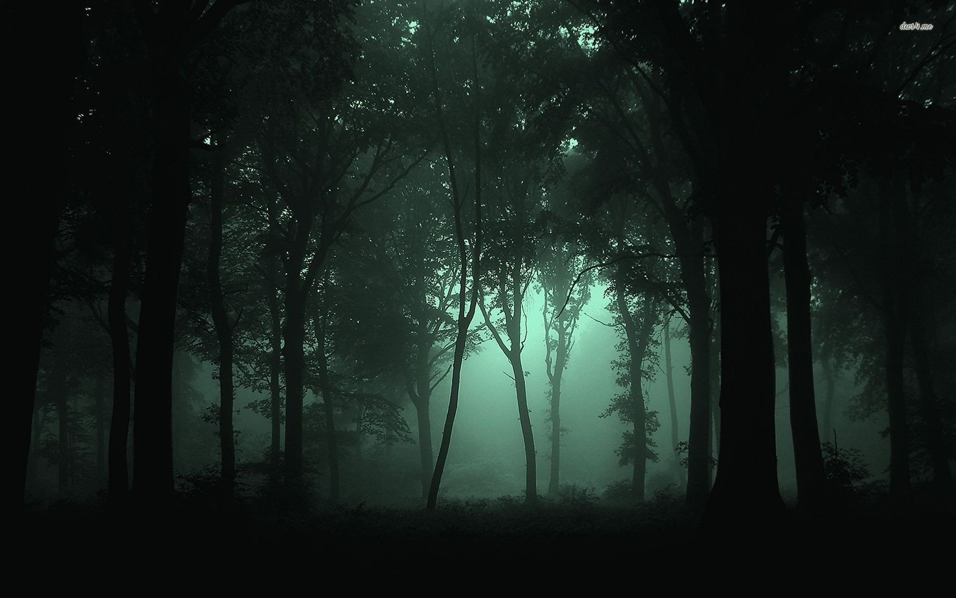 Dark Foggy Forest 708472