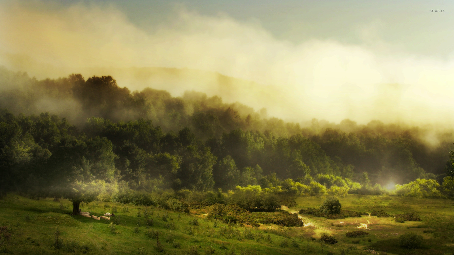 Lambs resting near the foggy forest wallpaper