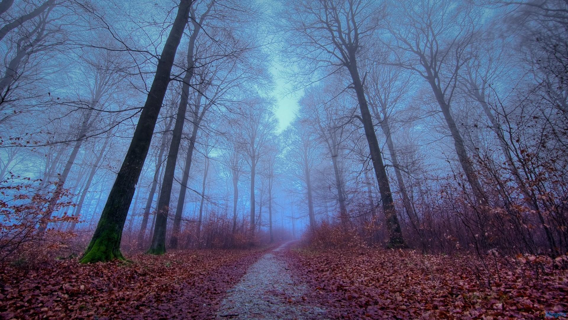 Fog Forest Autumn