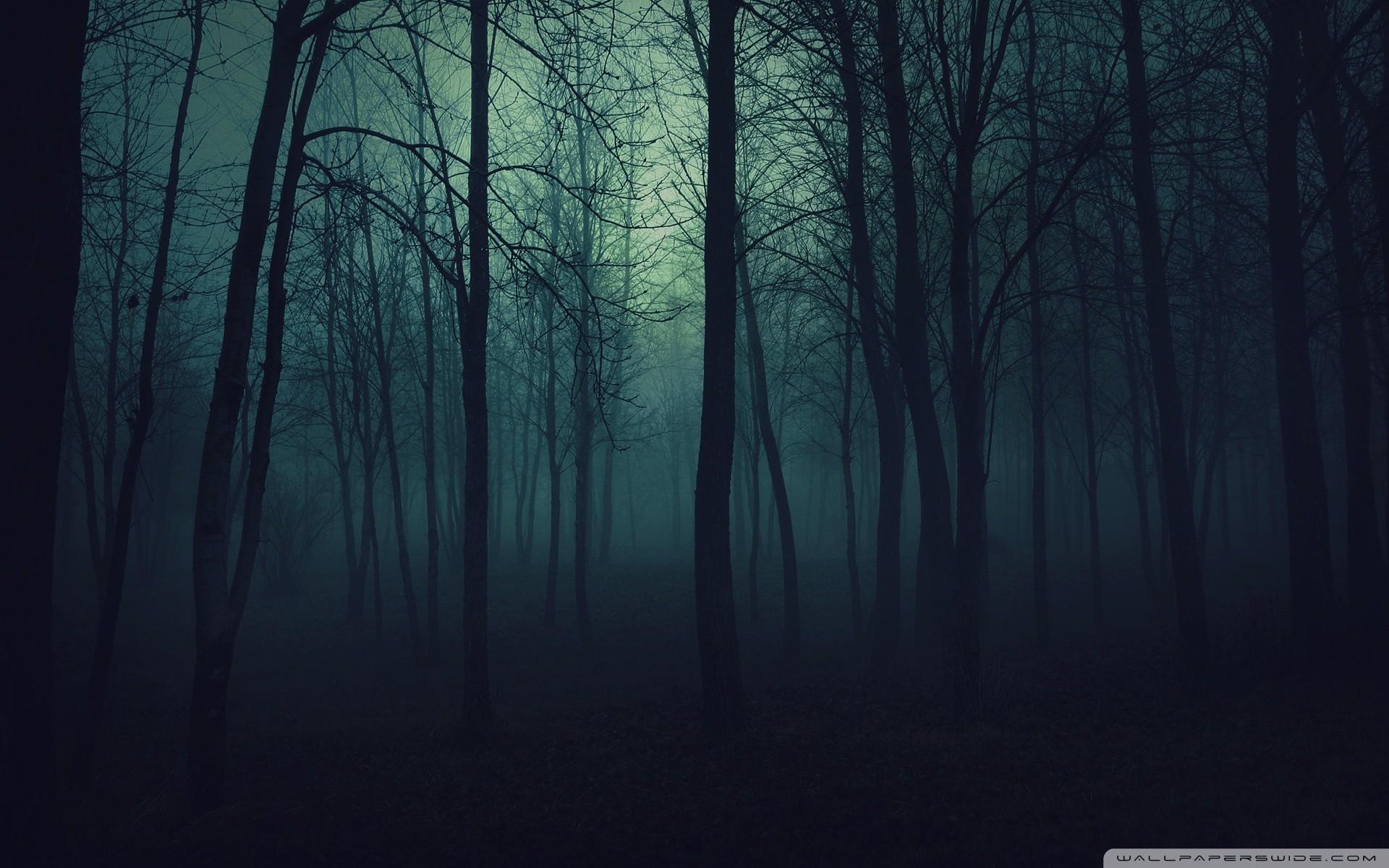landscape dark forest image pc