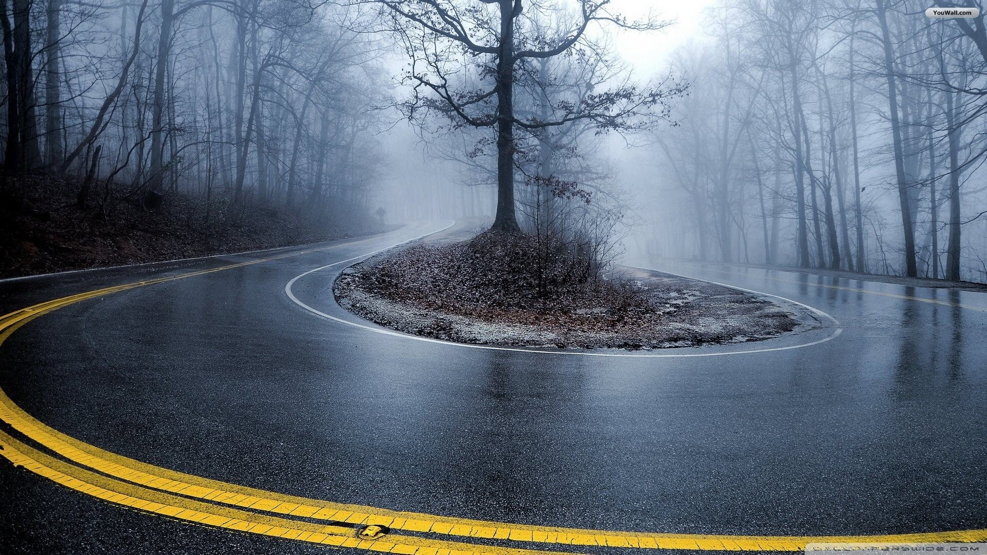 Foggy Forest Road Wallpaper