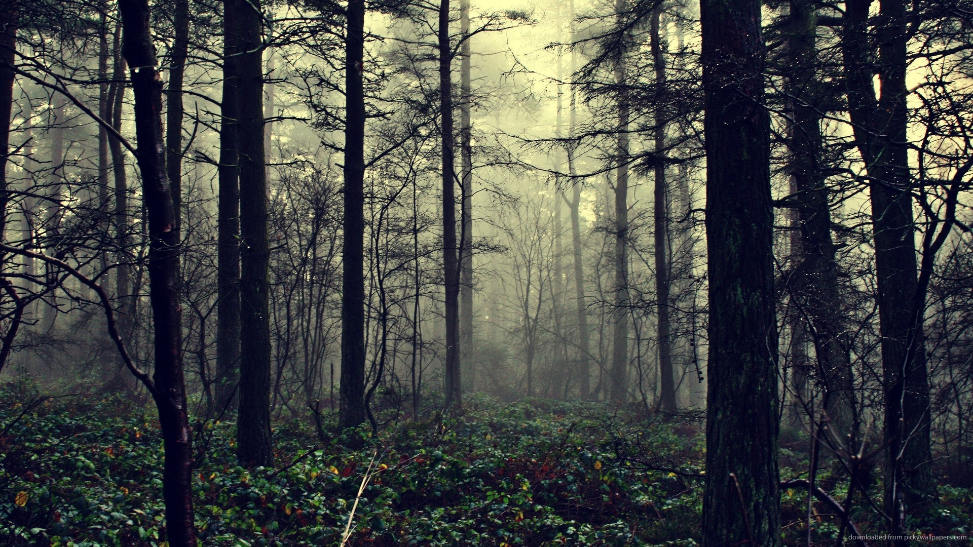 2560×1440 Foggy Forest wallpaper