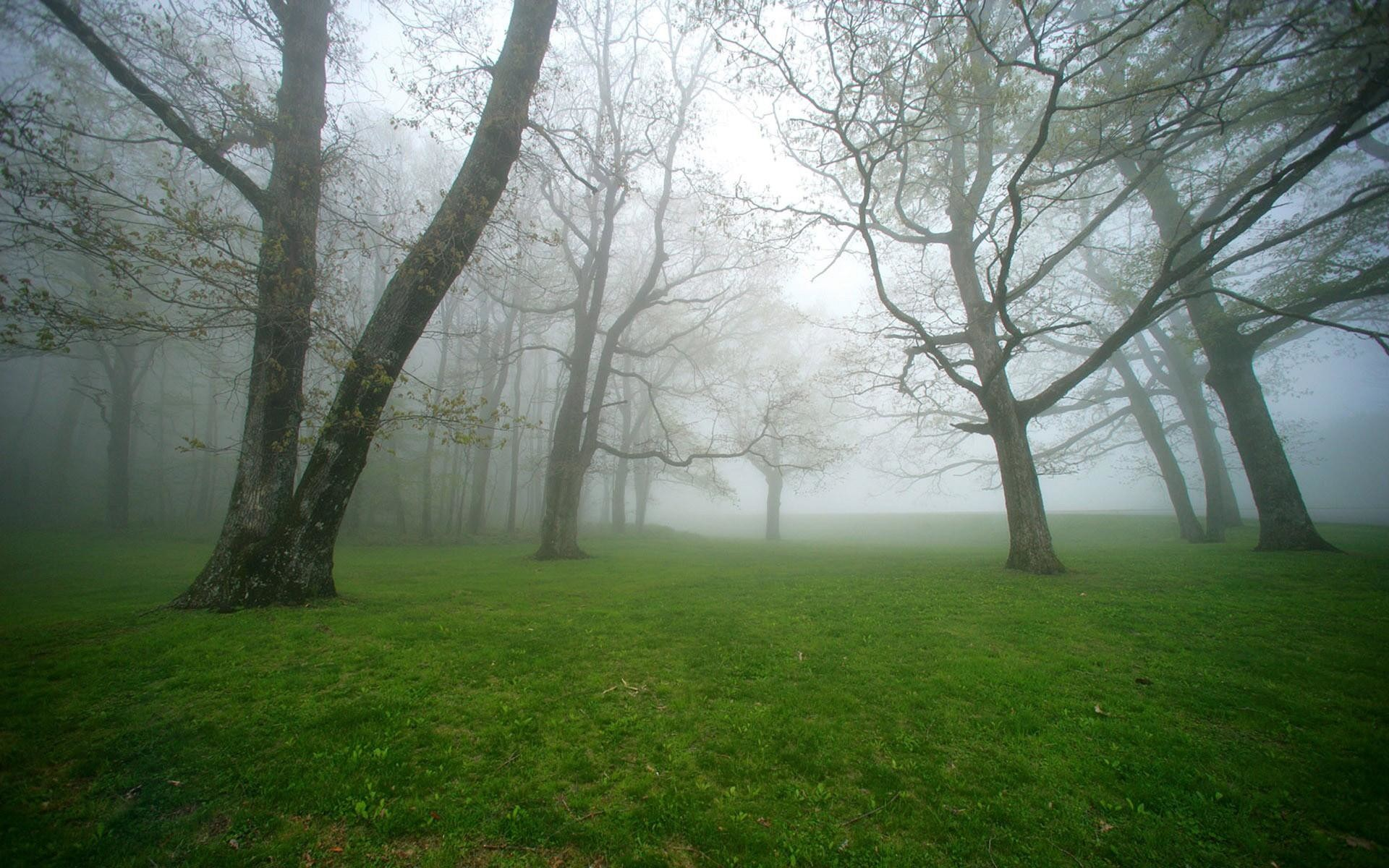 Foggy Forest Wallpaper Pictures 13888