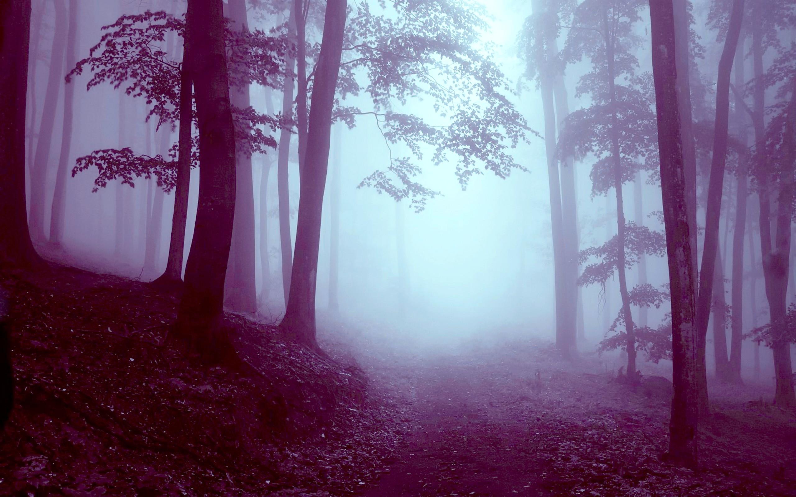 wallpaper.wiki-HD-foggy-forest-background-PIC-WPB004348