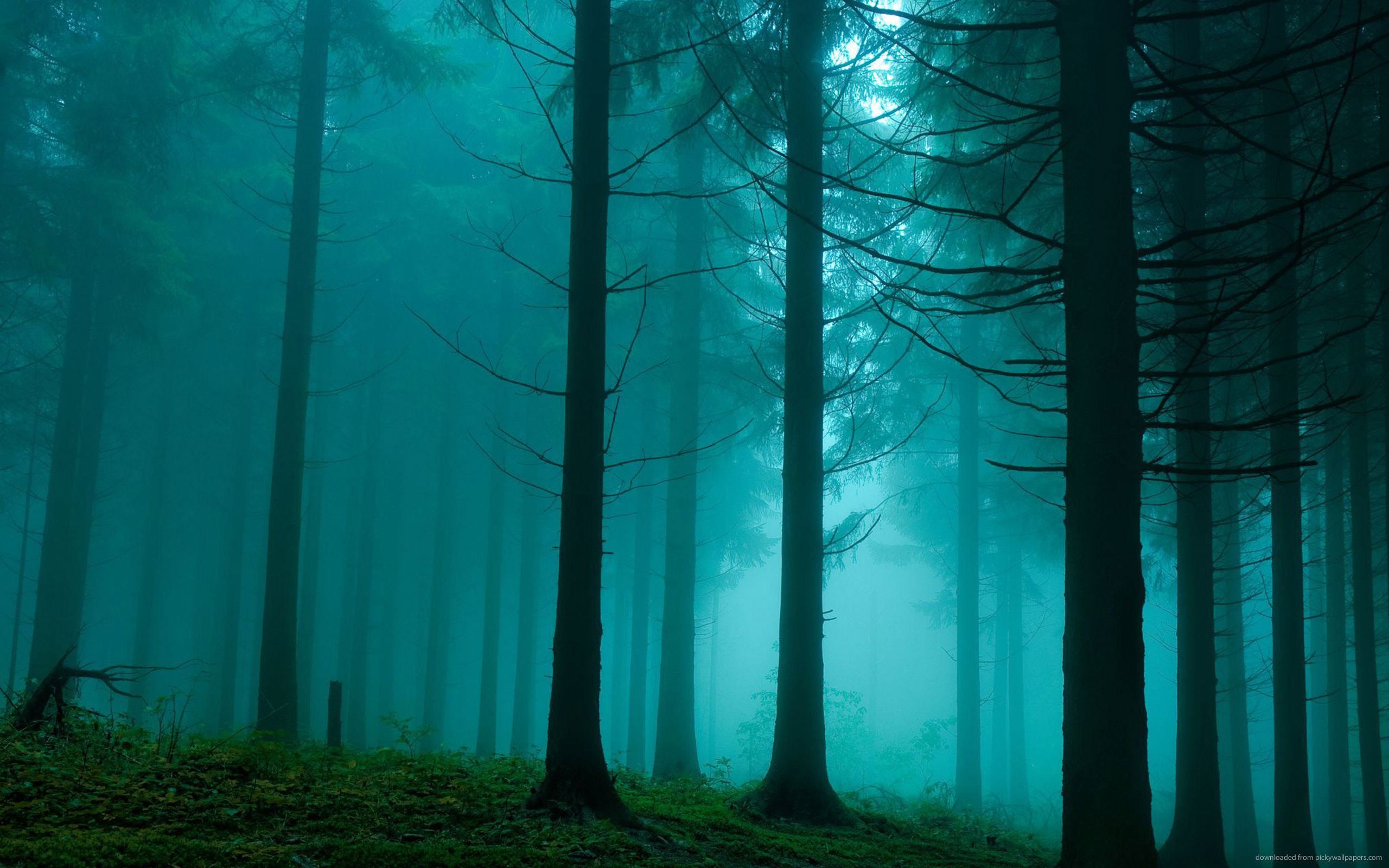 Forest In The Mist for 2560×1600