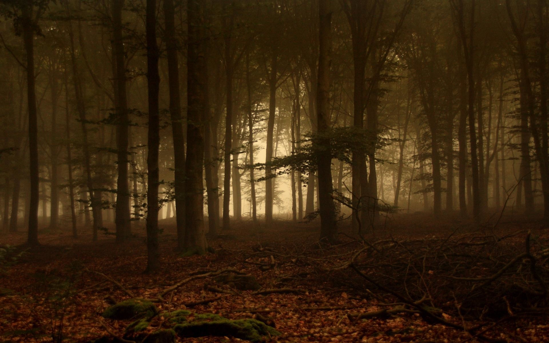 wallpaper.wiki-HD-Foggy-Forest-Backgrounds-Download-PIC-WPB004349