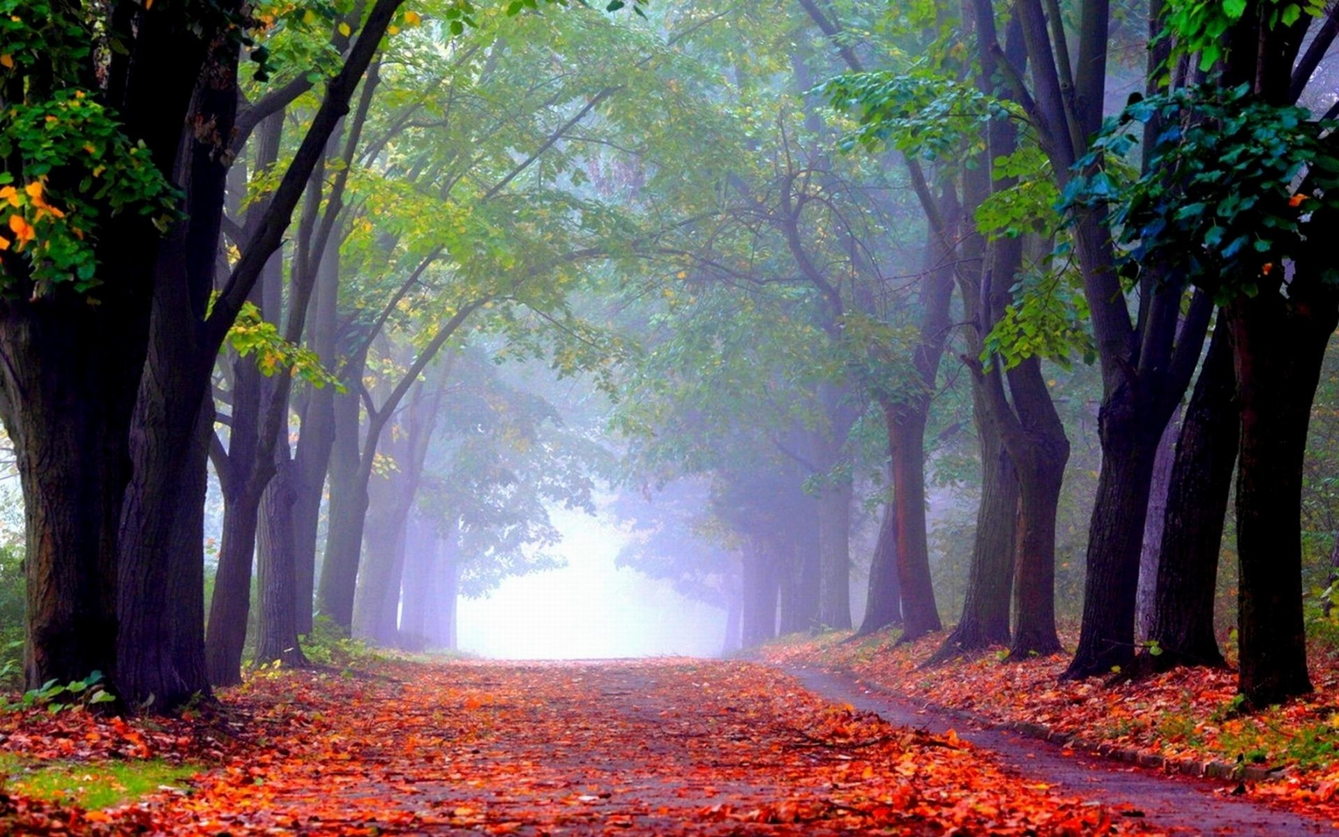 Foggy Forest Wallpaper