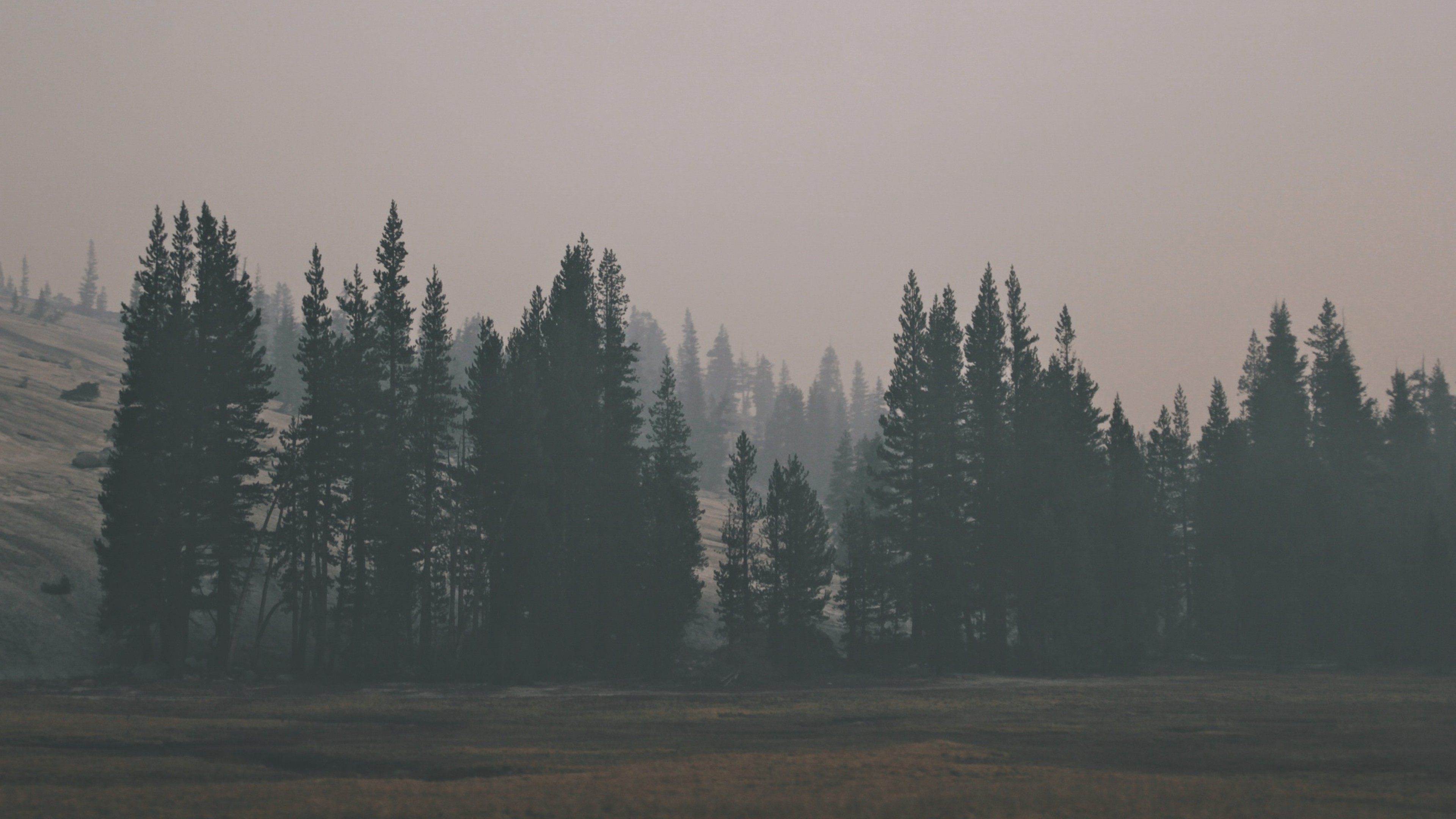 Preview wallpaper forest, hill, fog 3840×2160