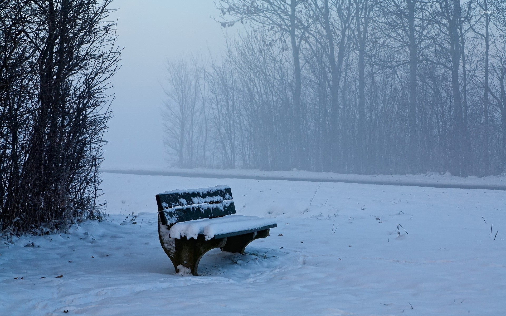 Bench in the foggy forest wallpaper jpg