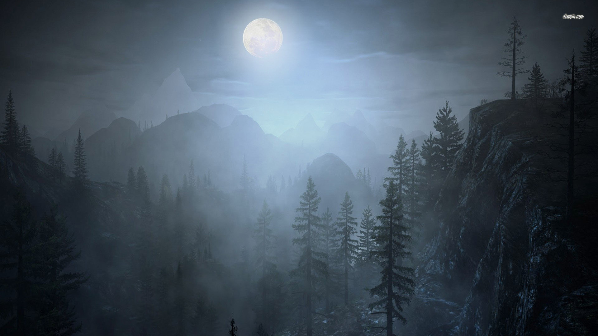 Fog Forest Night