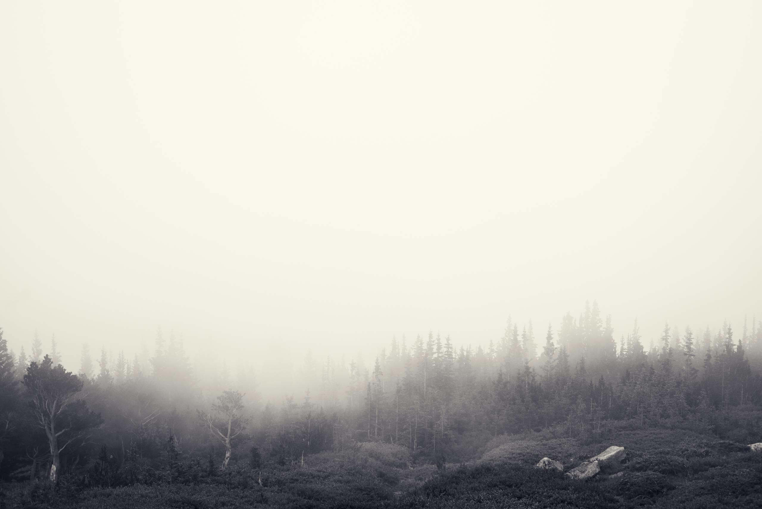 Berries – Tom Kijas Foggy Forest – Jake Stewart …