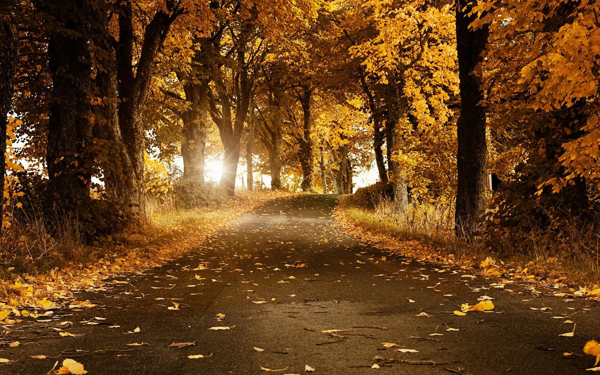 HD-Fall-Scenery-Wallpapers