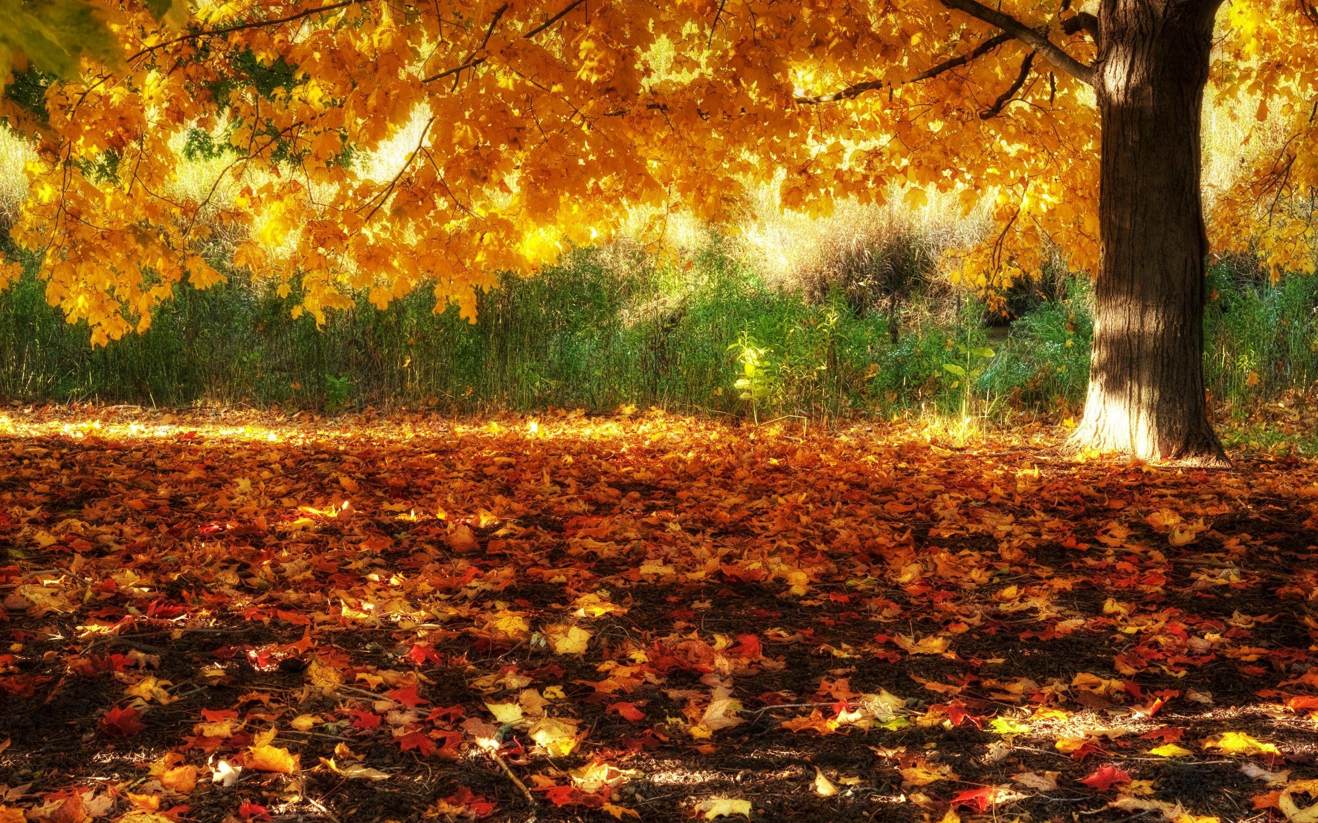 HD Fall Scenery Wallpapers #8194