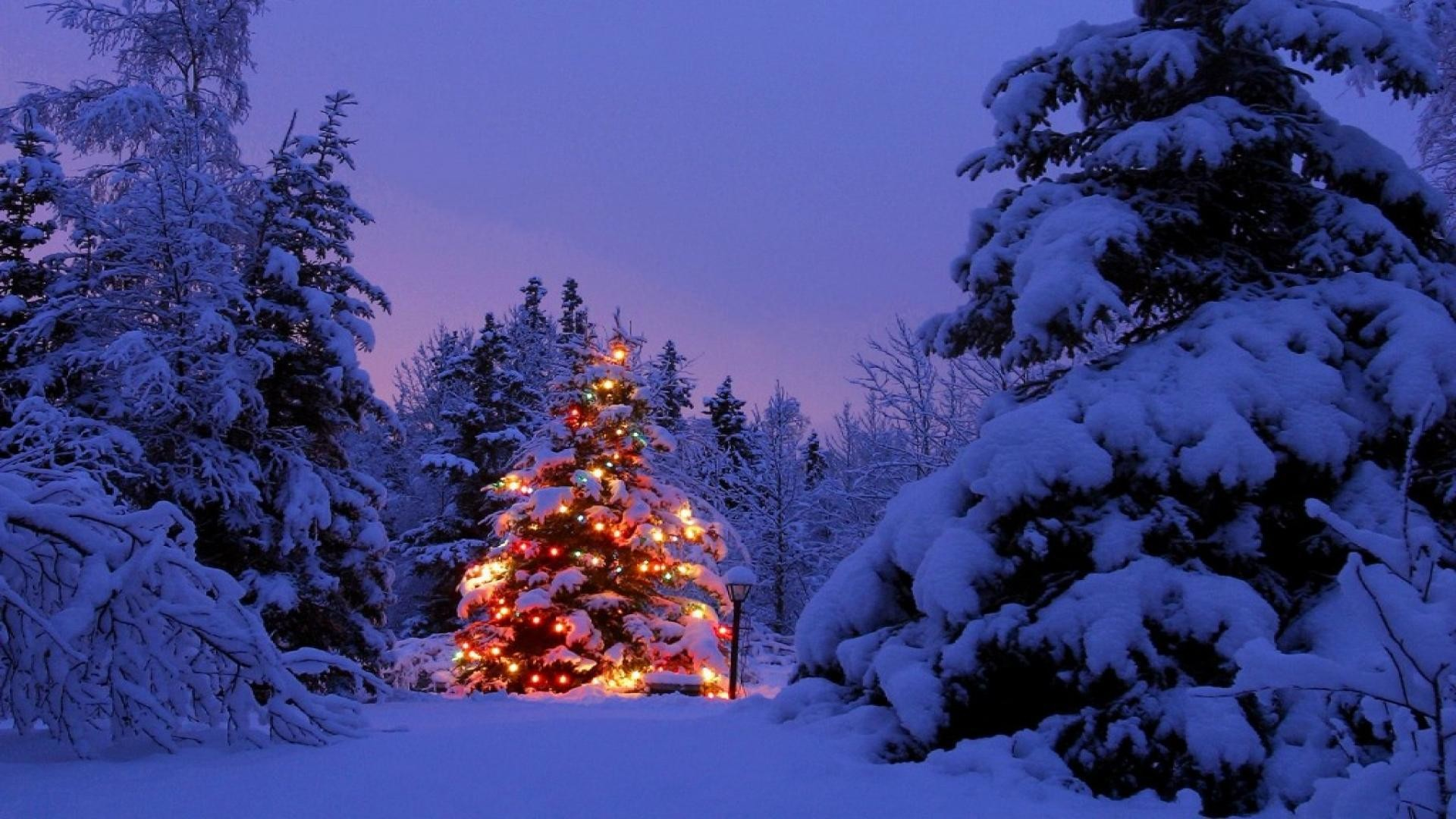Wallpapers For > Christmas Scenery Backgrounds