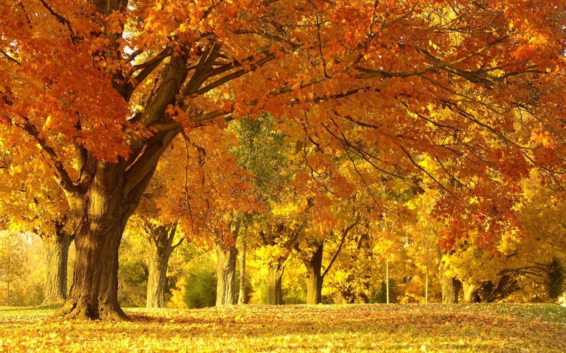 autumn scenery backgrounds. Â«Â«