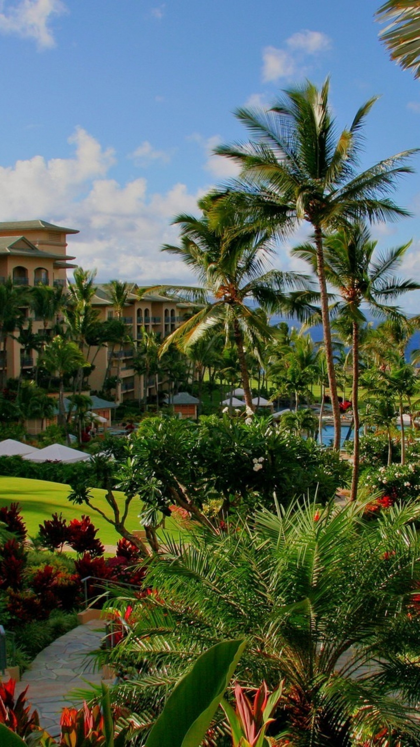 Preview wallpaper hawaii, hotel, palm trees, swimming pool, sea, flowers  1440×2560